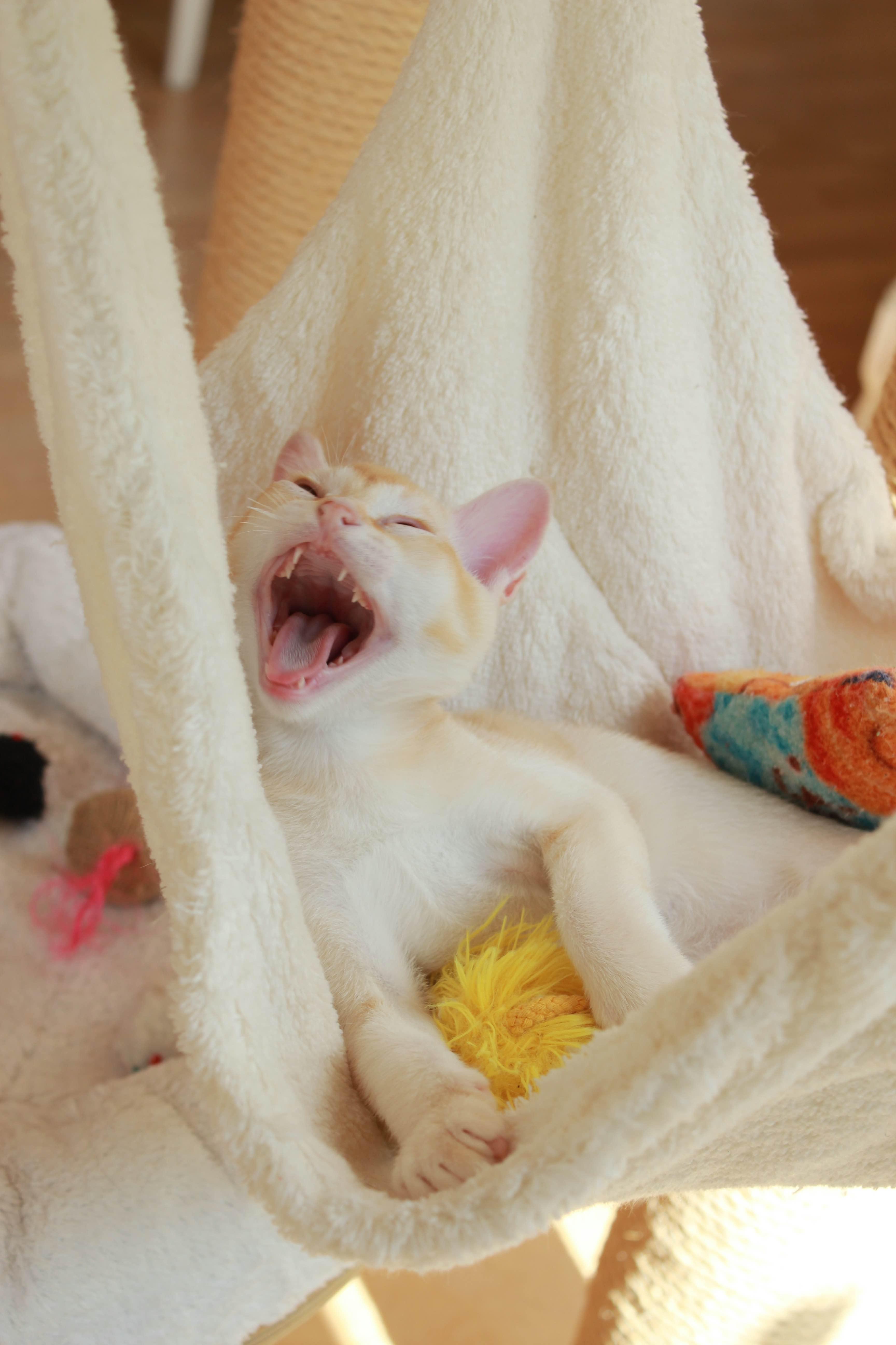 Katzen 005_Fotor