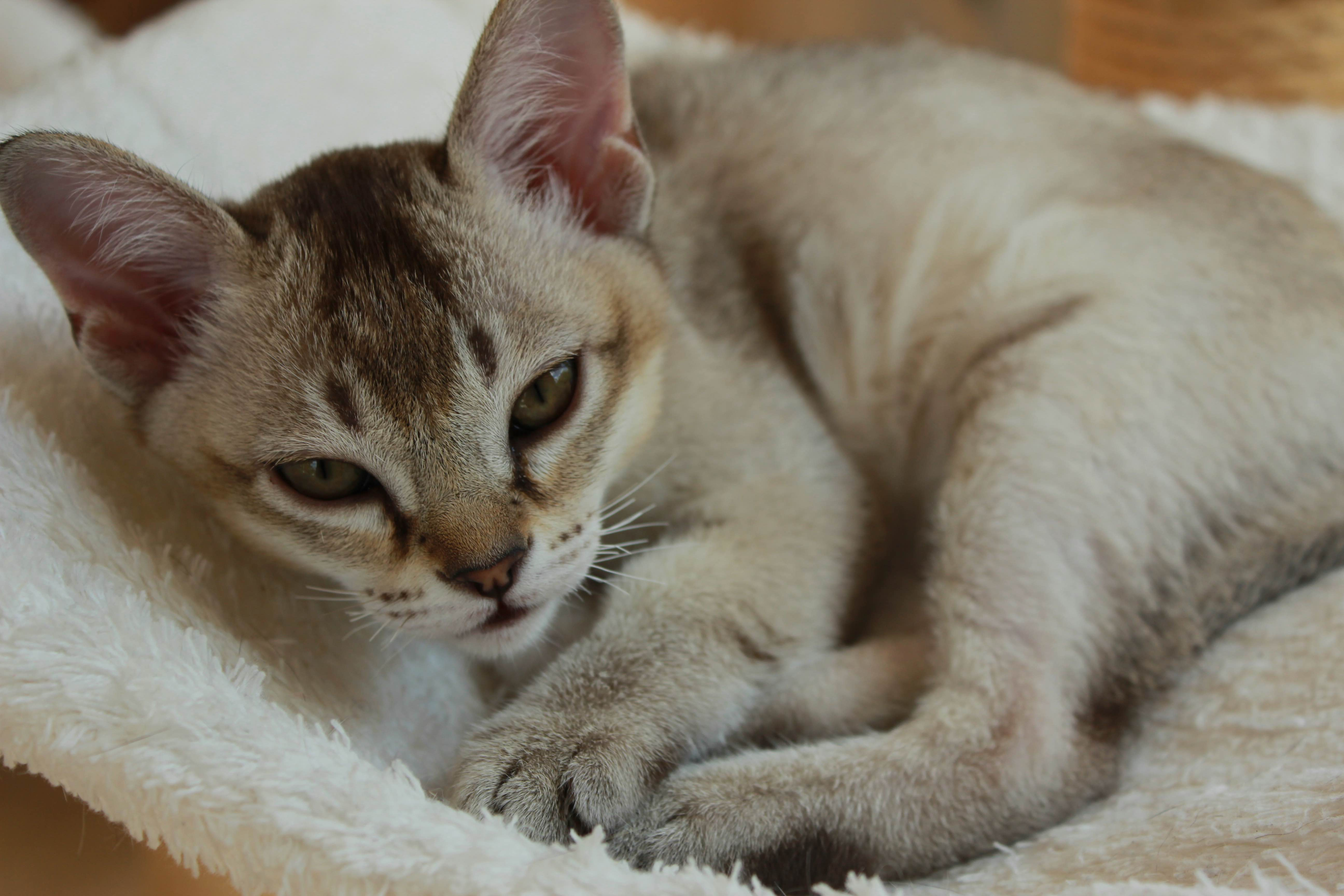 Katzen 011_Fotor