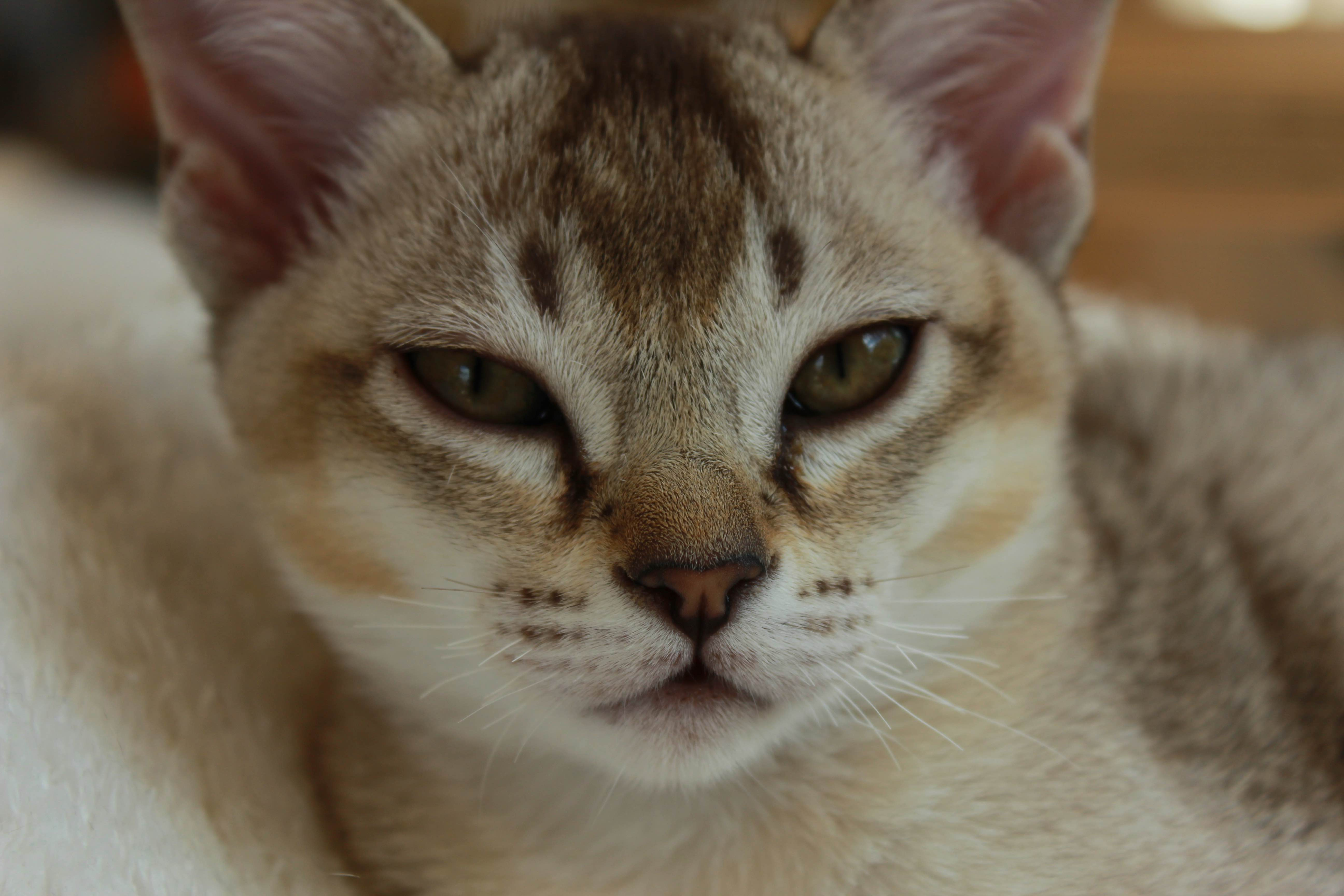 Katzen 014_Fotor
