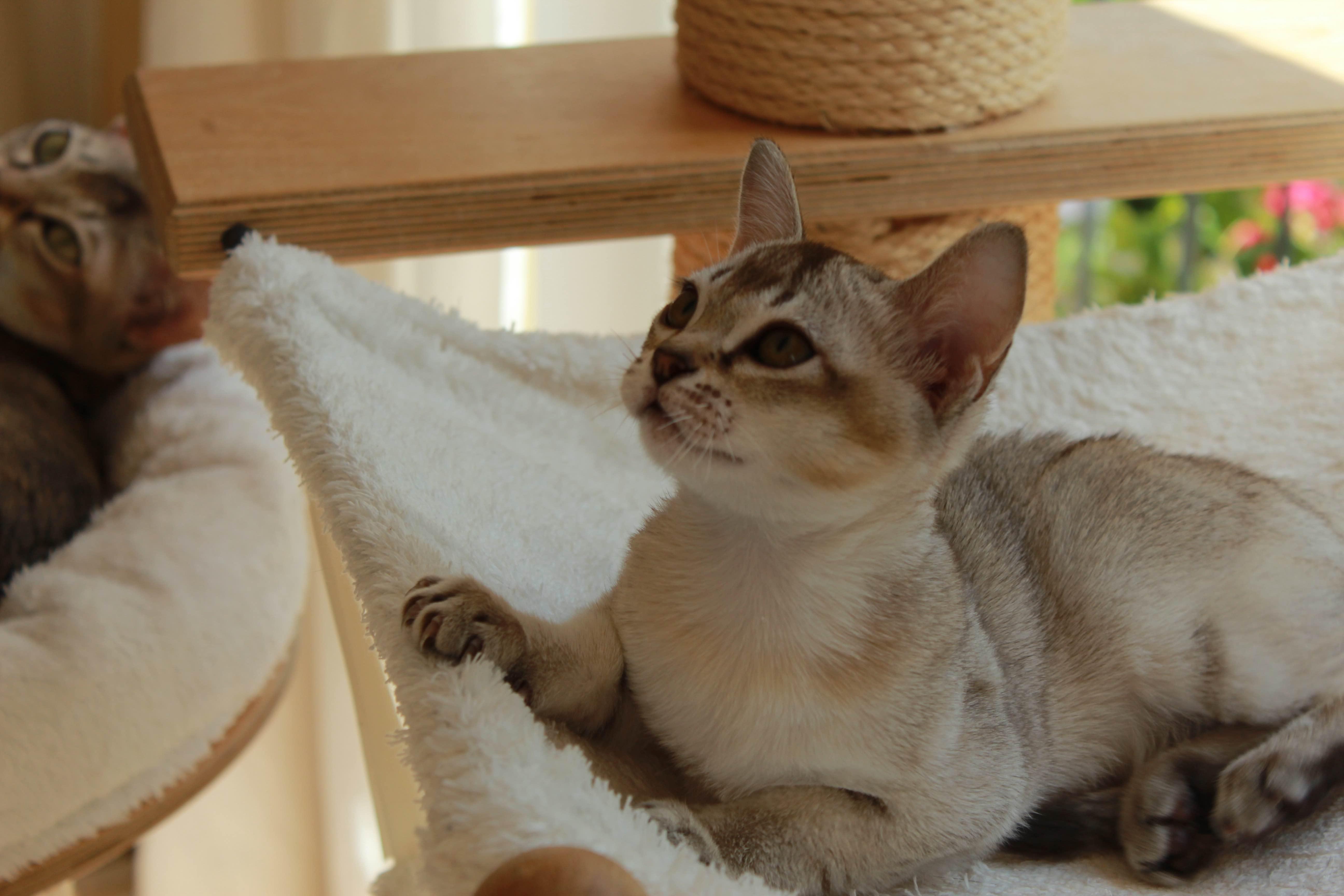 Katzen 015_Fotor