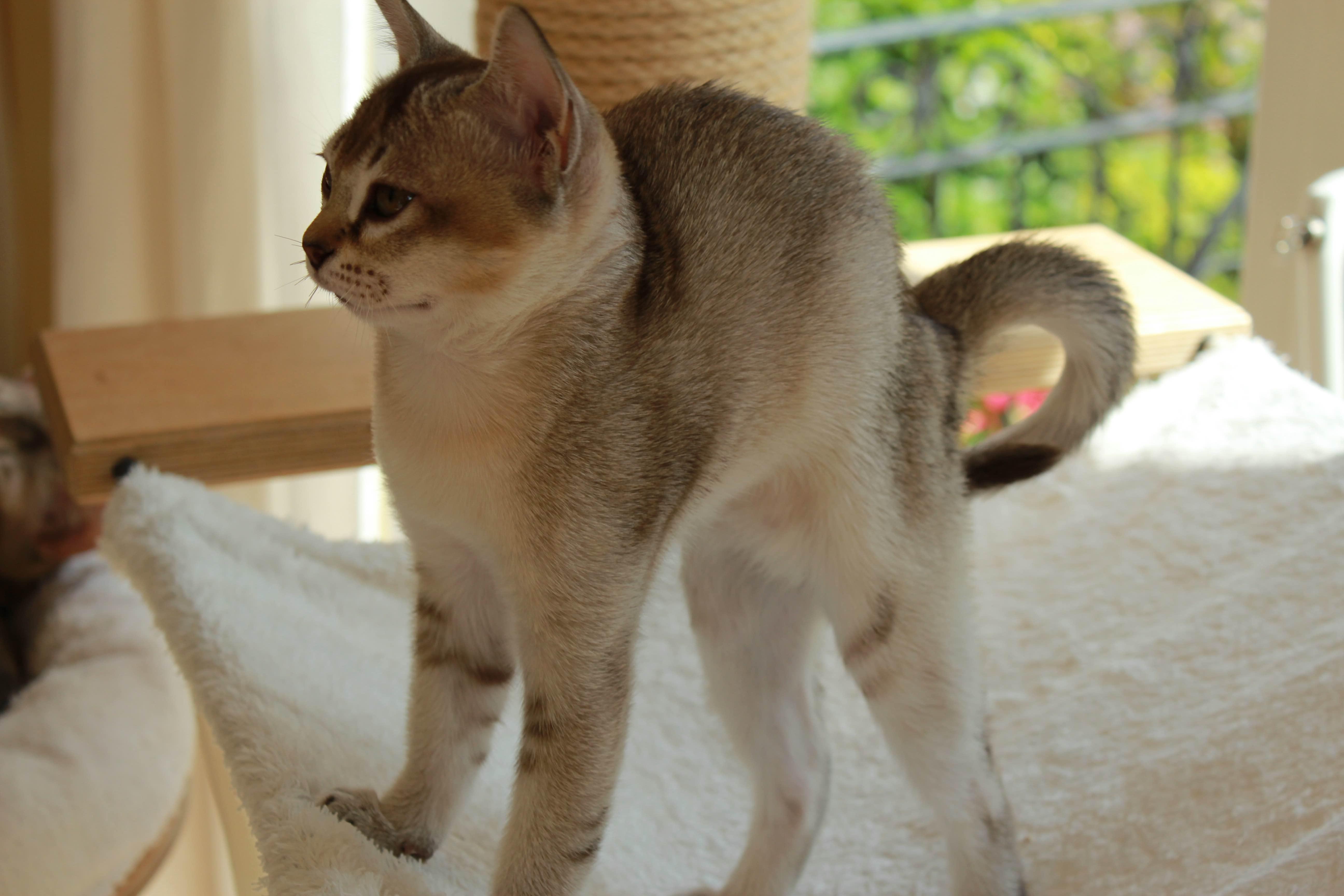 Katzen 016_Fotor