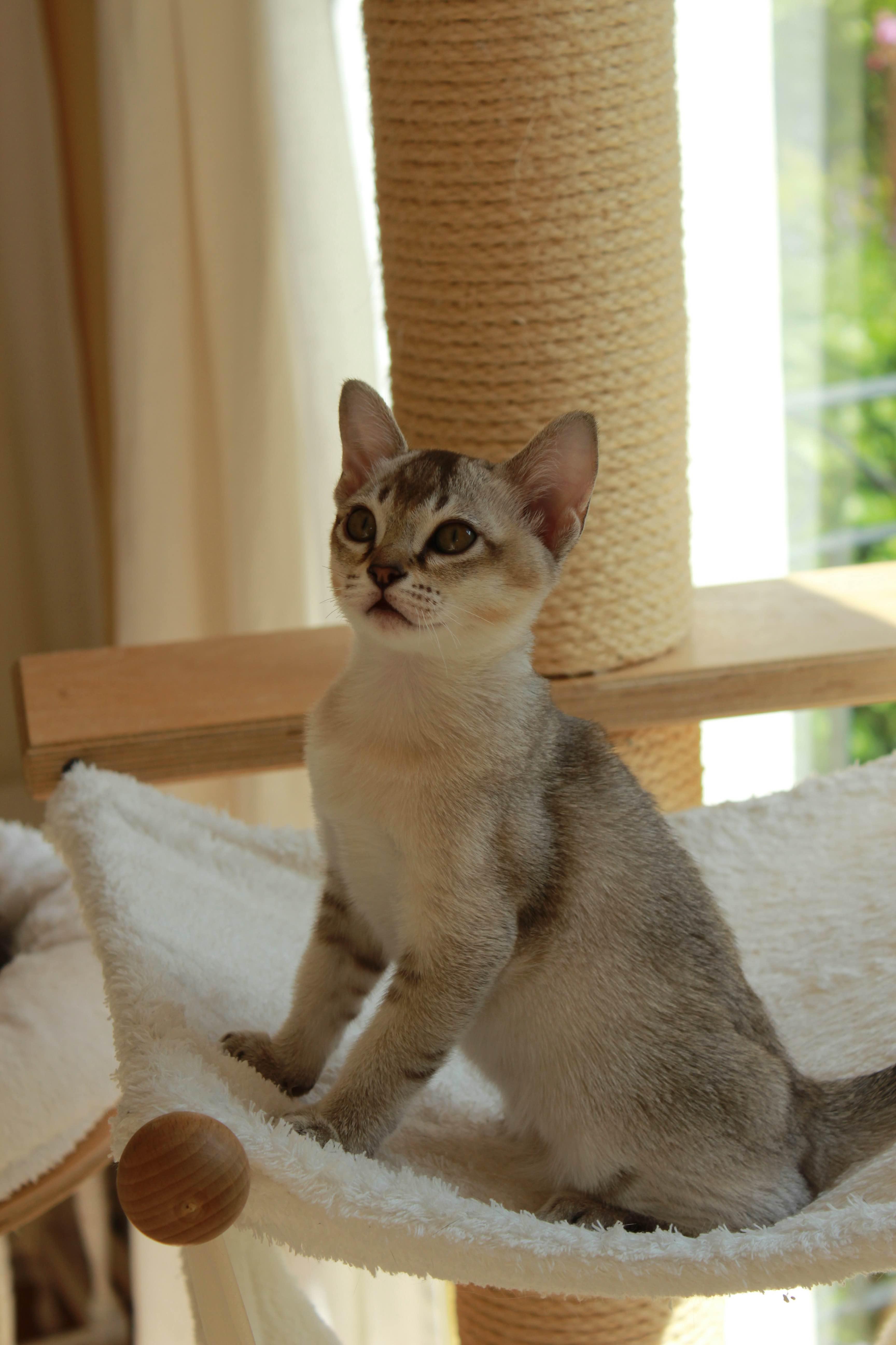Katzen 017_Fotor
