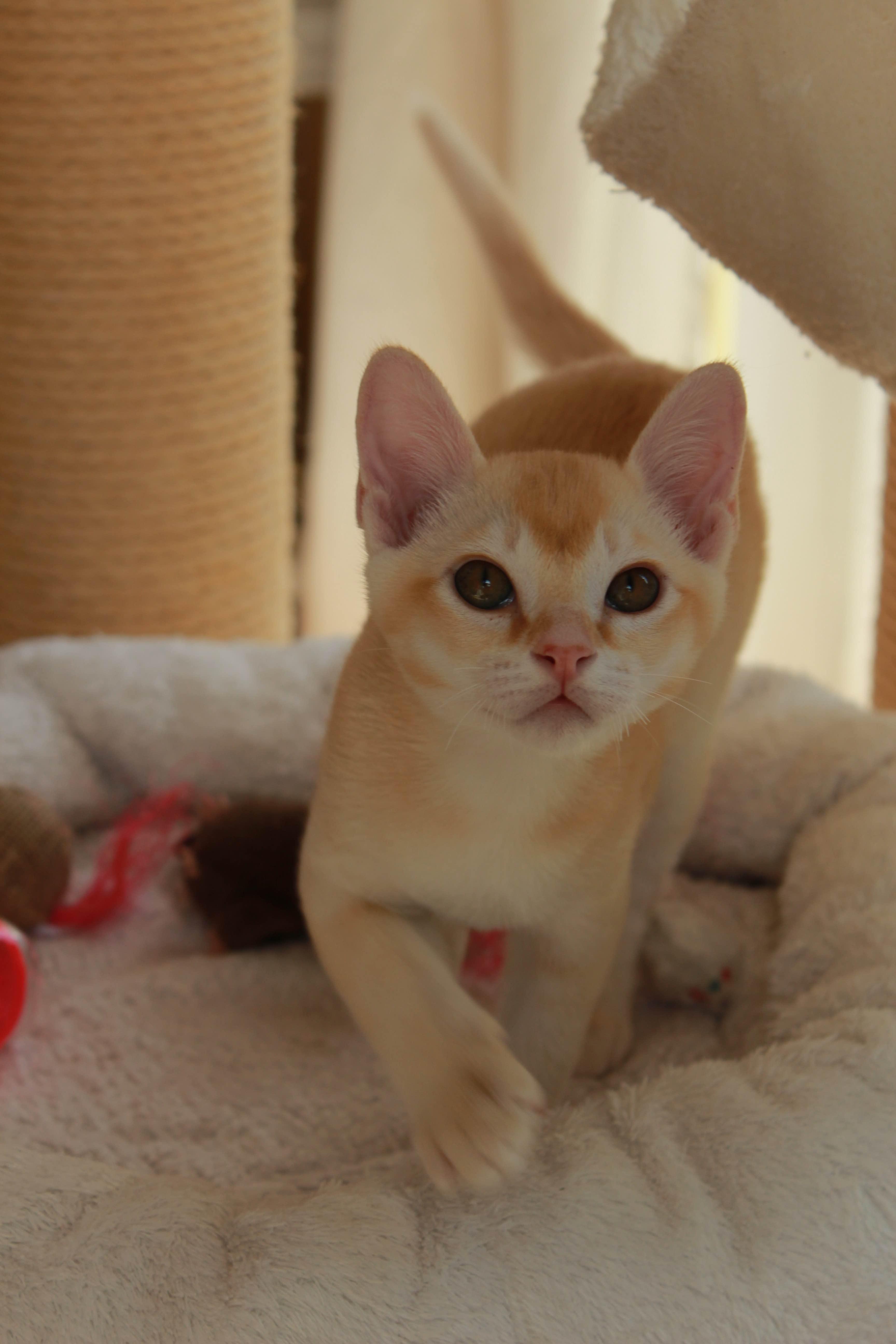 Katzen 019_Fotor