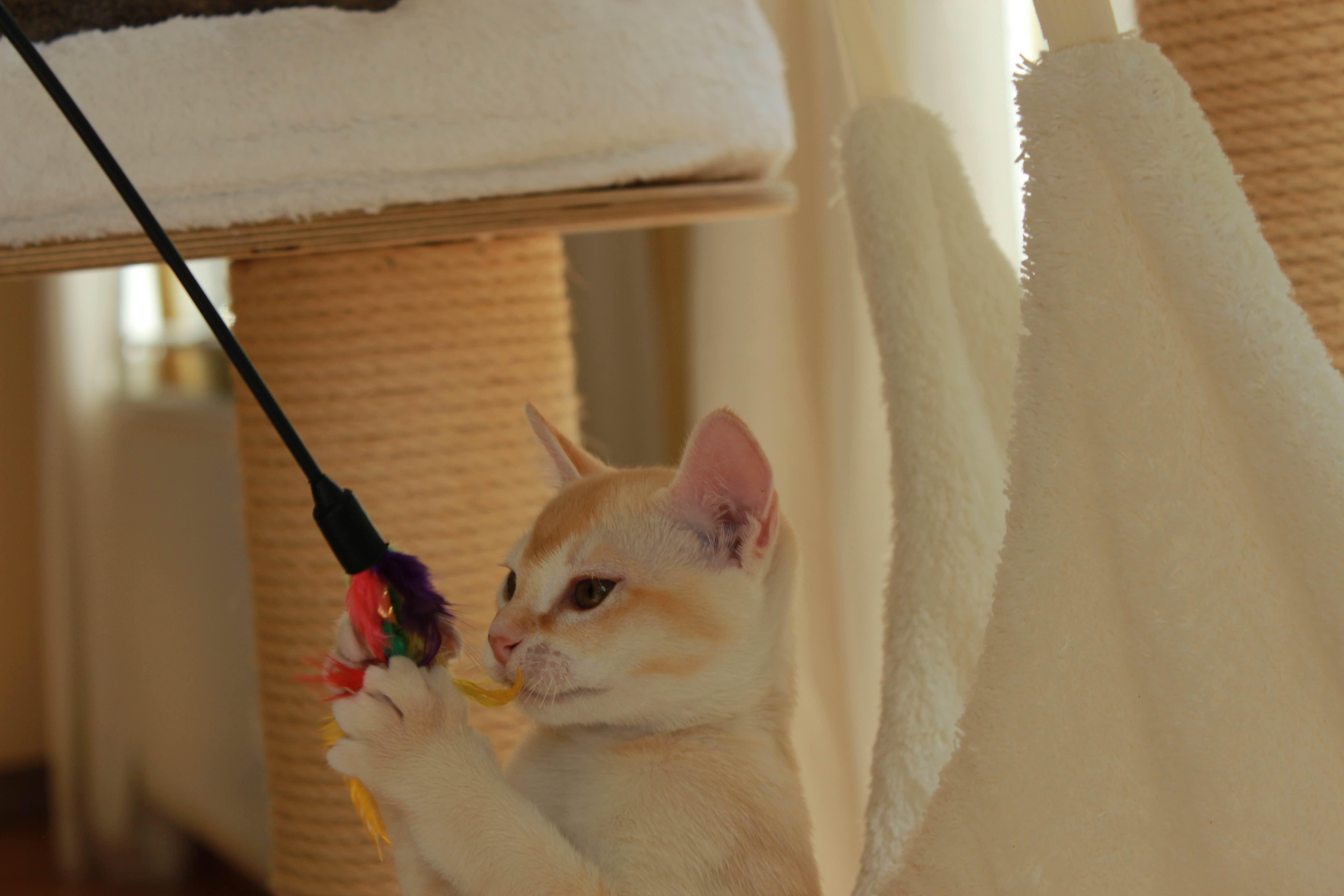 Katzen 023_Fotor