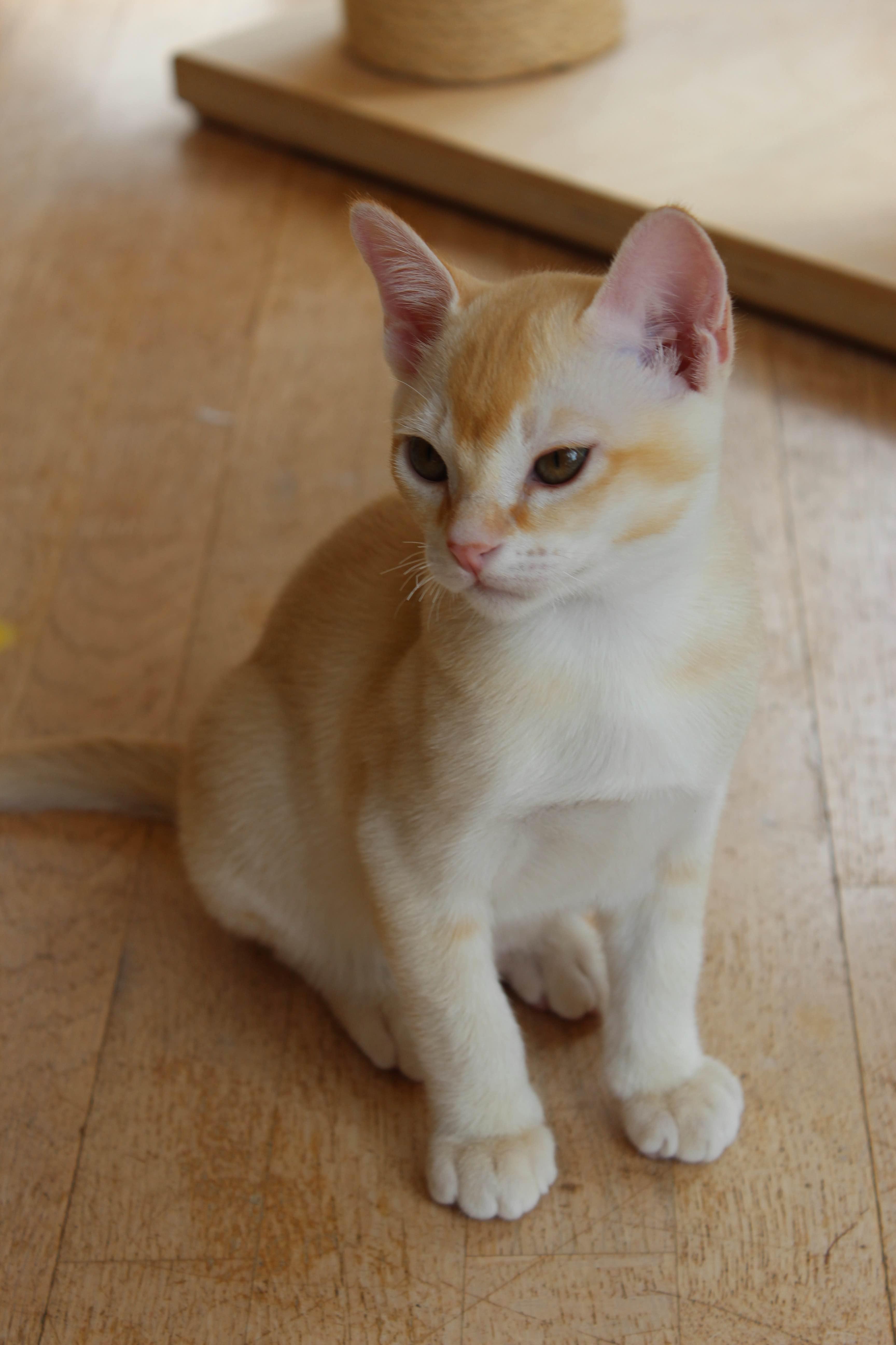 Katzen 036_Fotor
