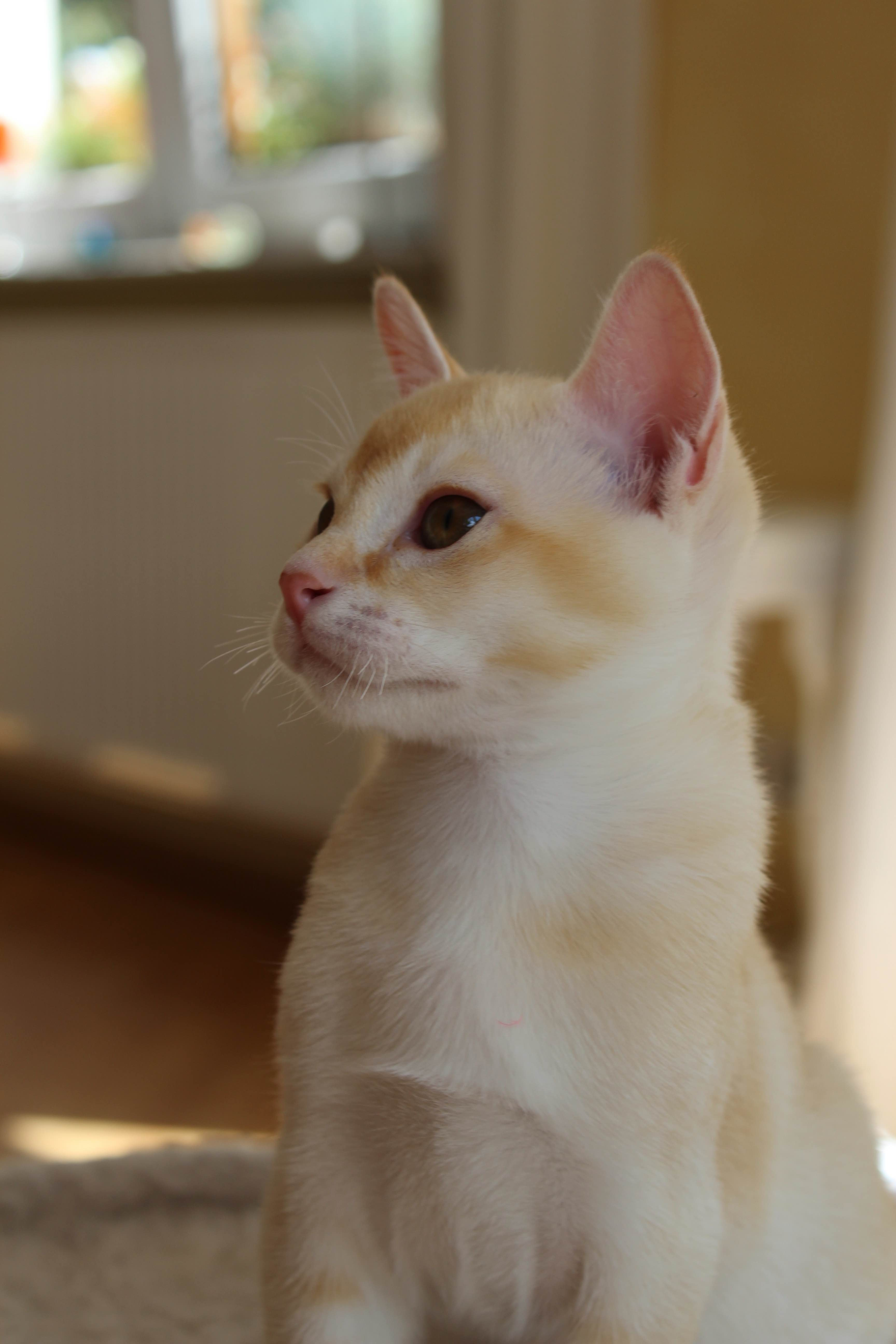 Katzen 064_Fotor
