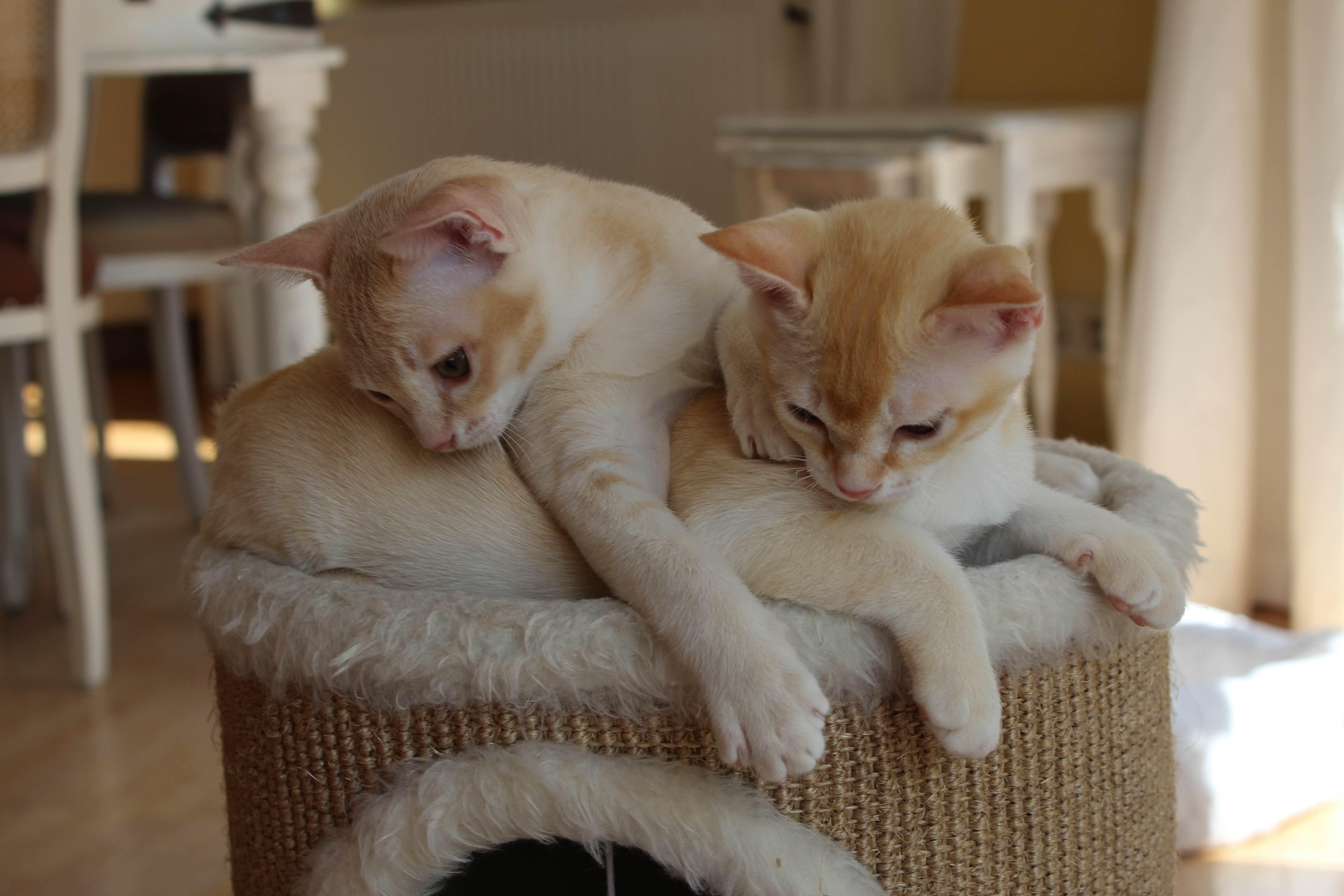 Katzen 077_Fotor