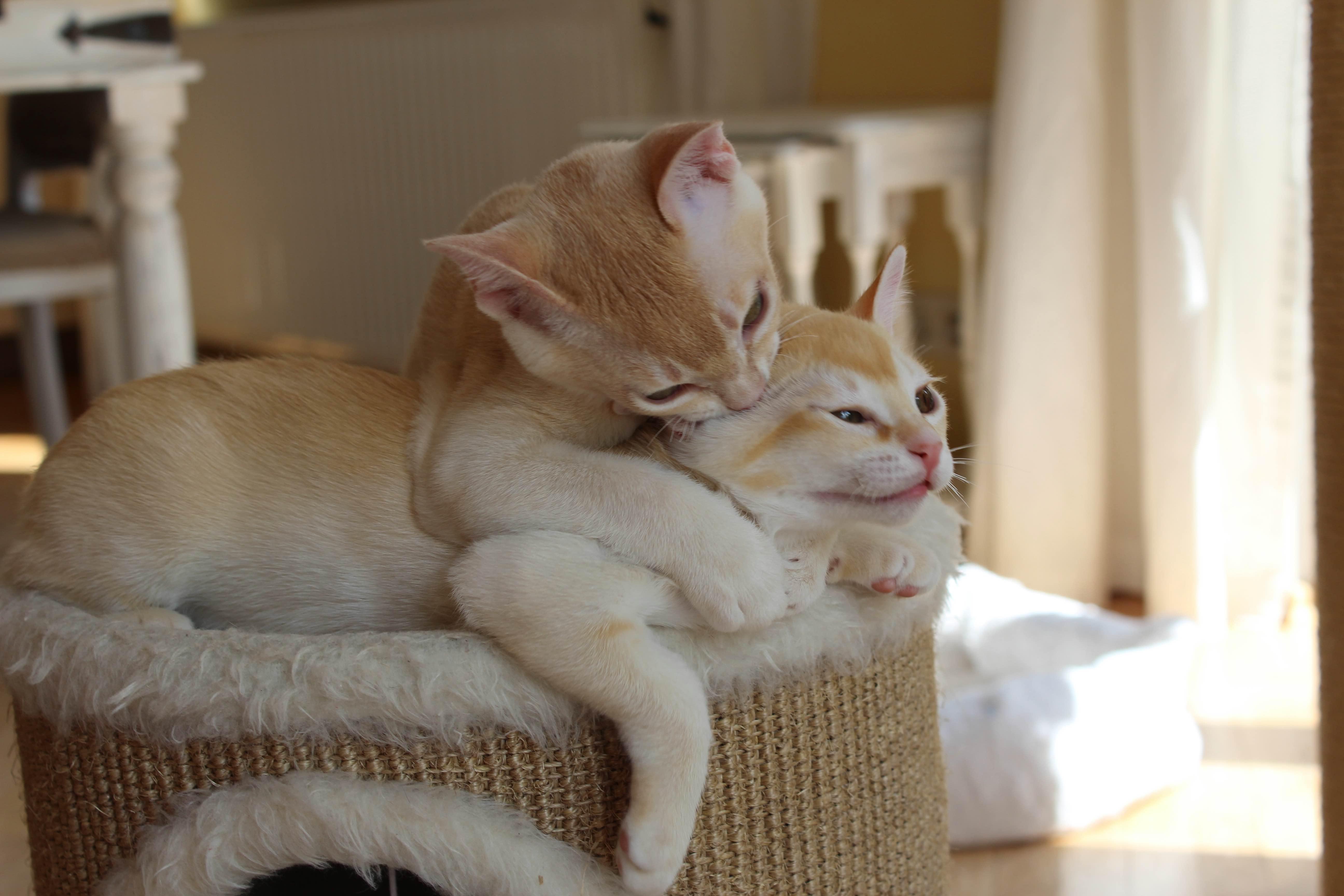 Katzen 078_Fotor