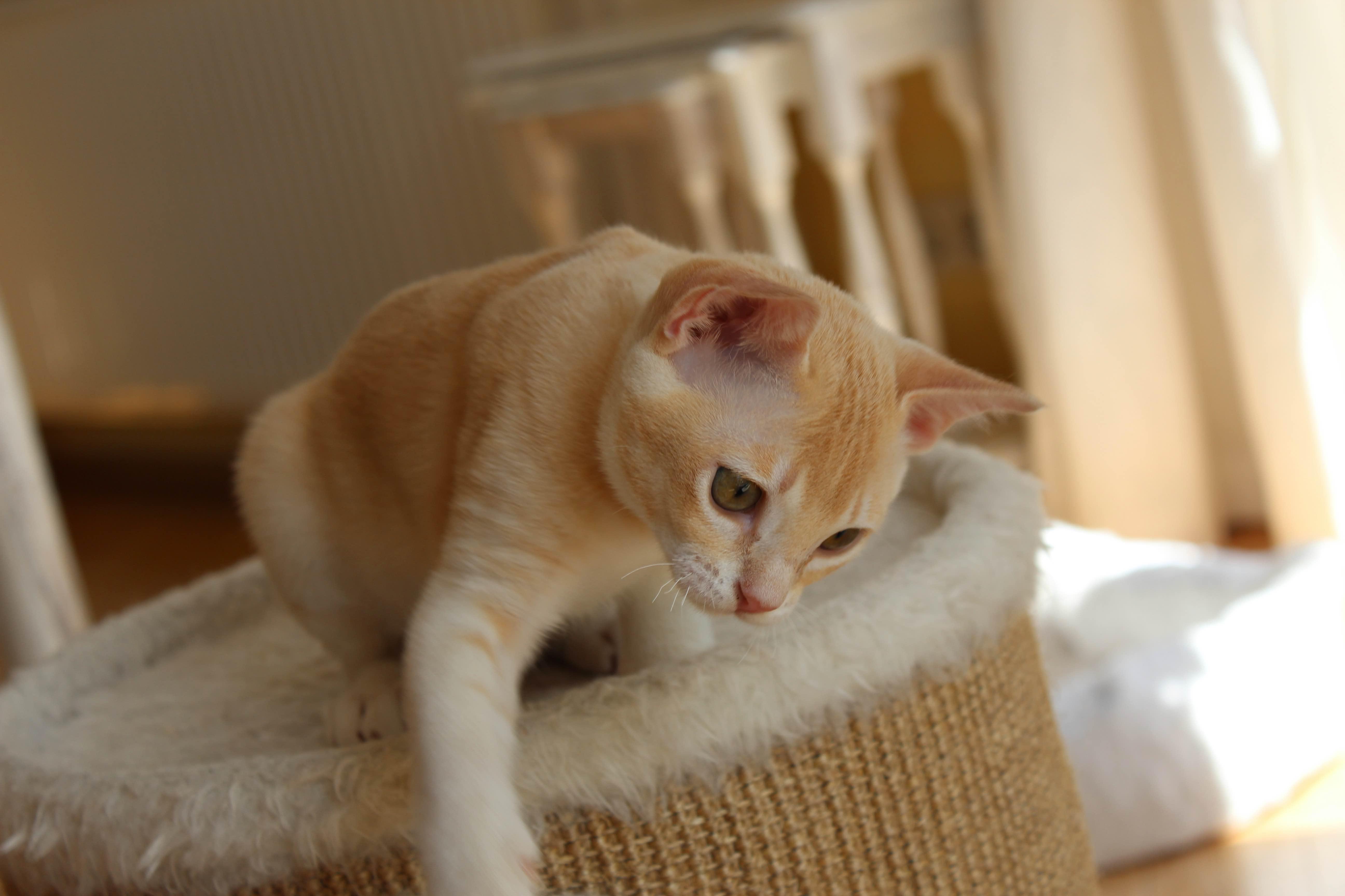 Katzen 085_Fotor