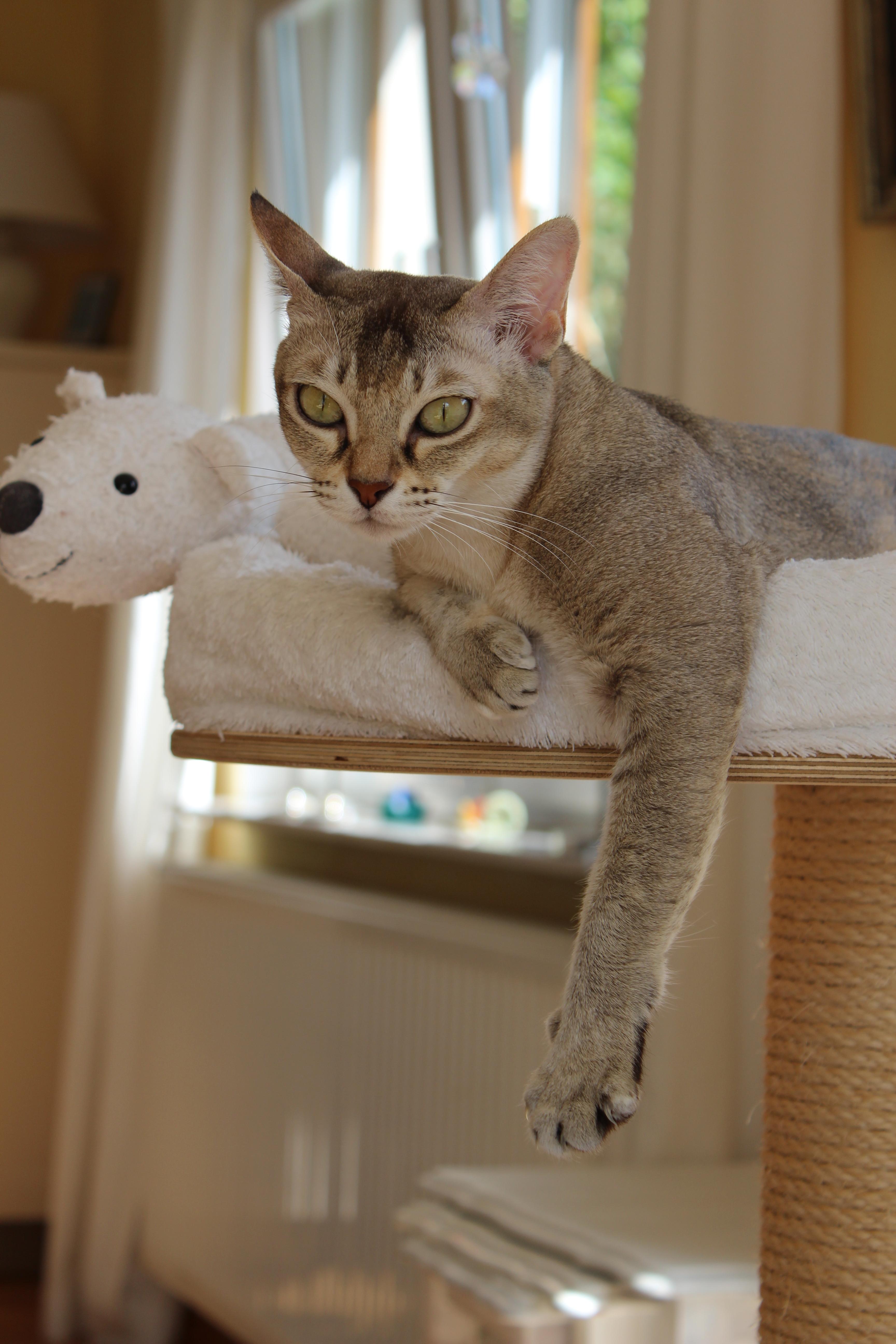 Katzen 091