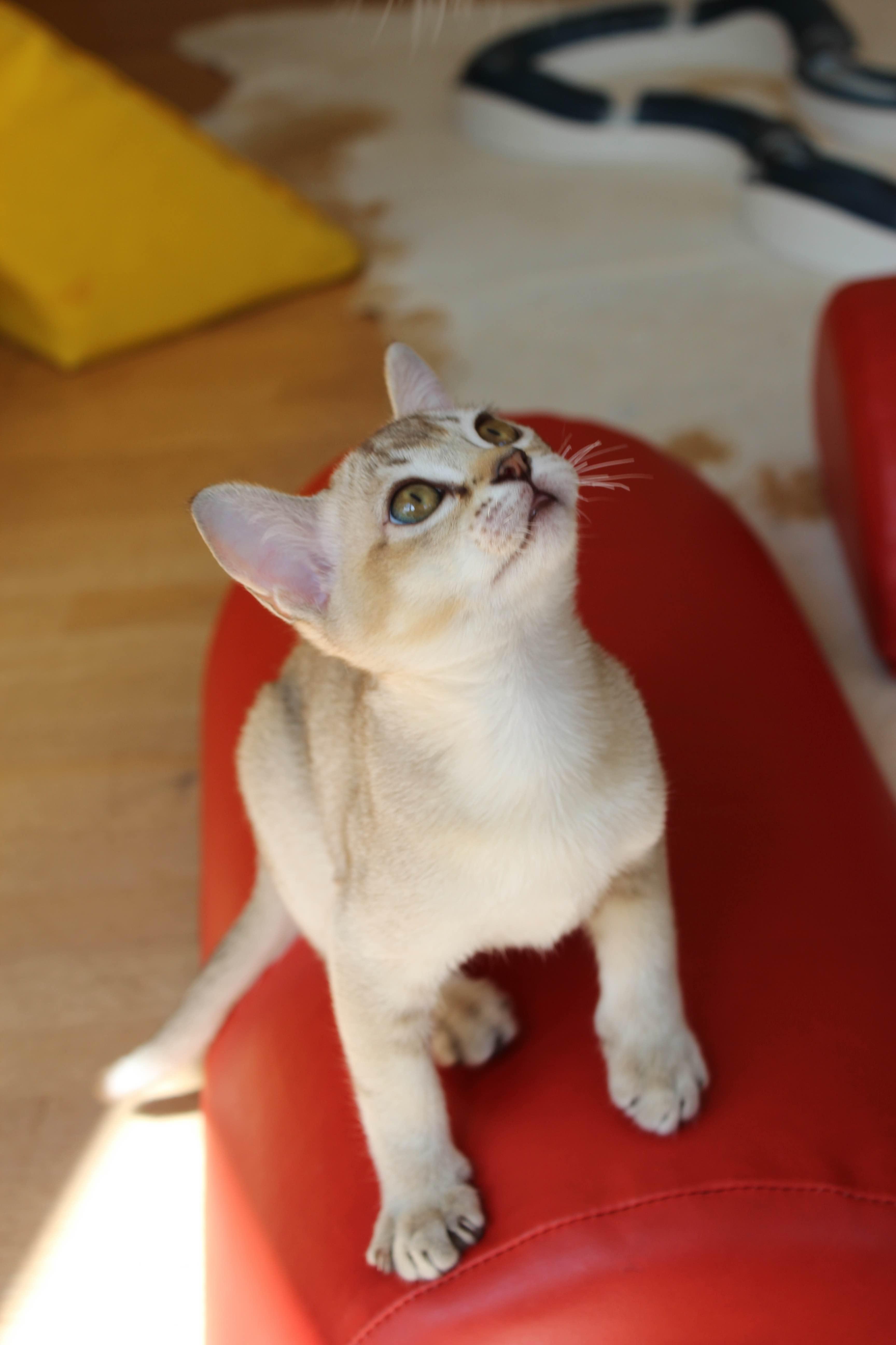 Katzen 098_Fotor
