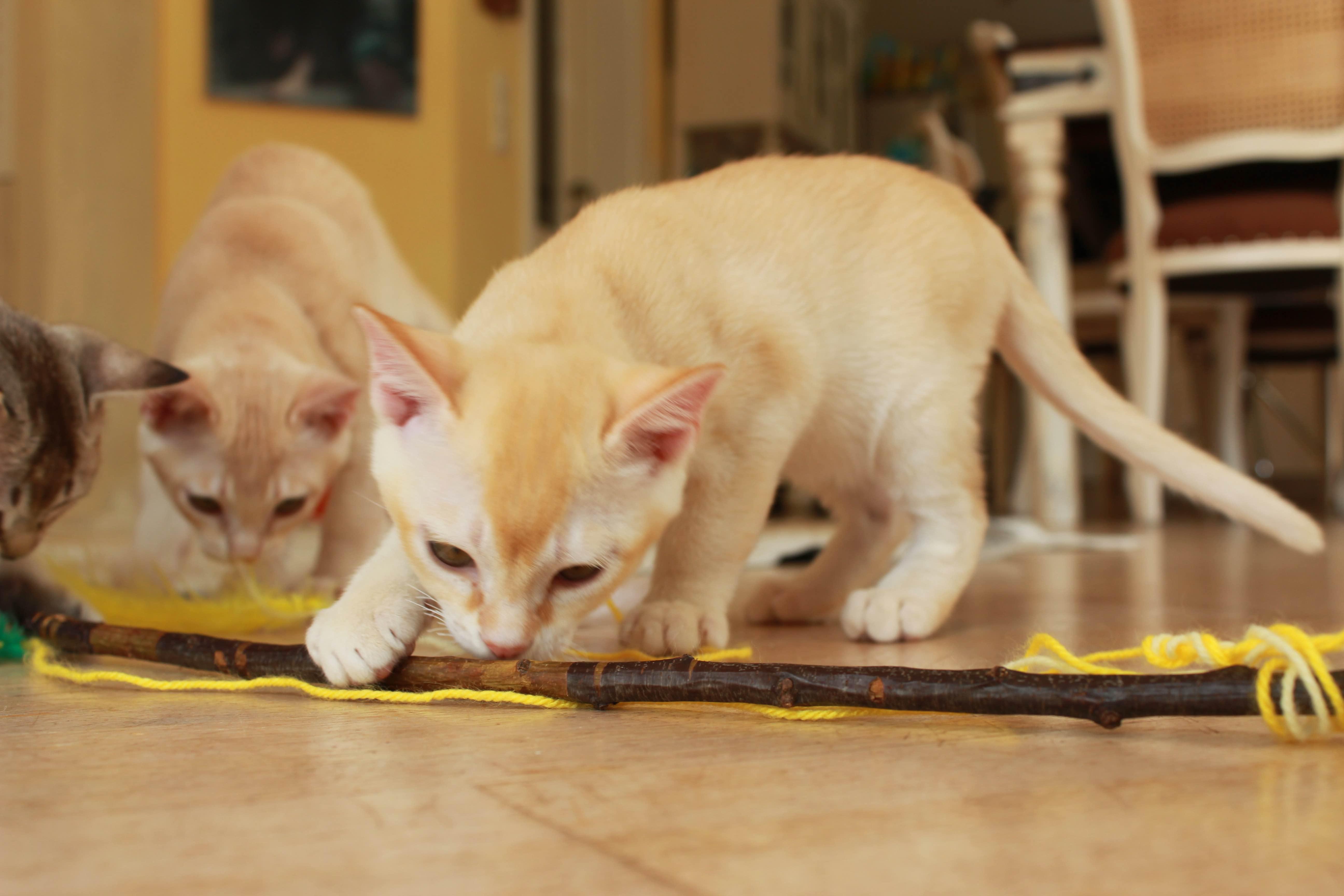 Katzen 107_Fotor