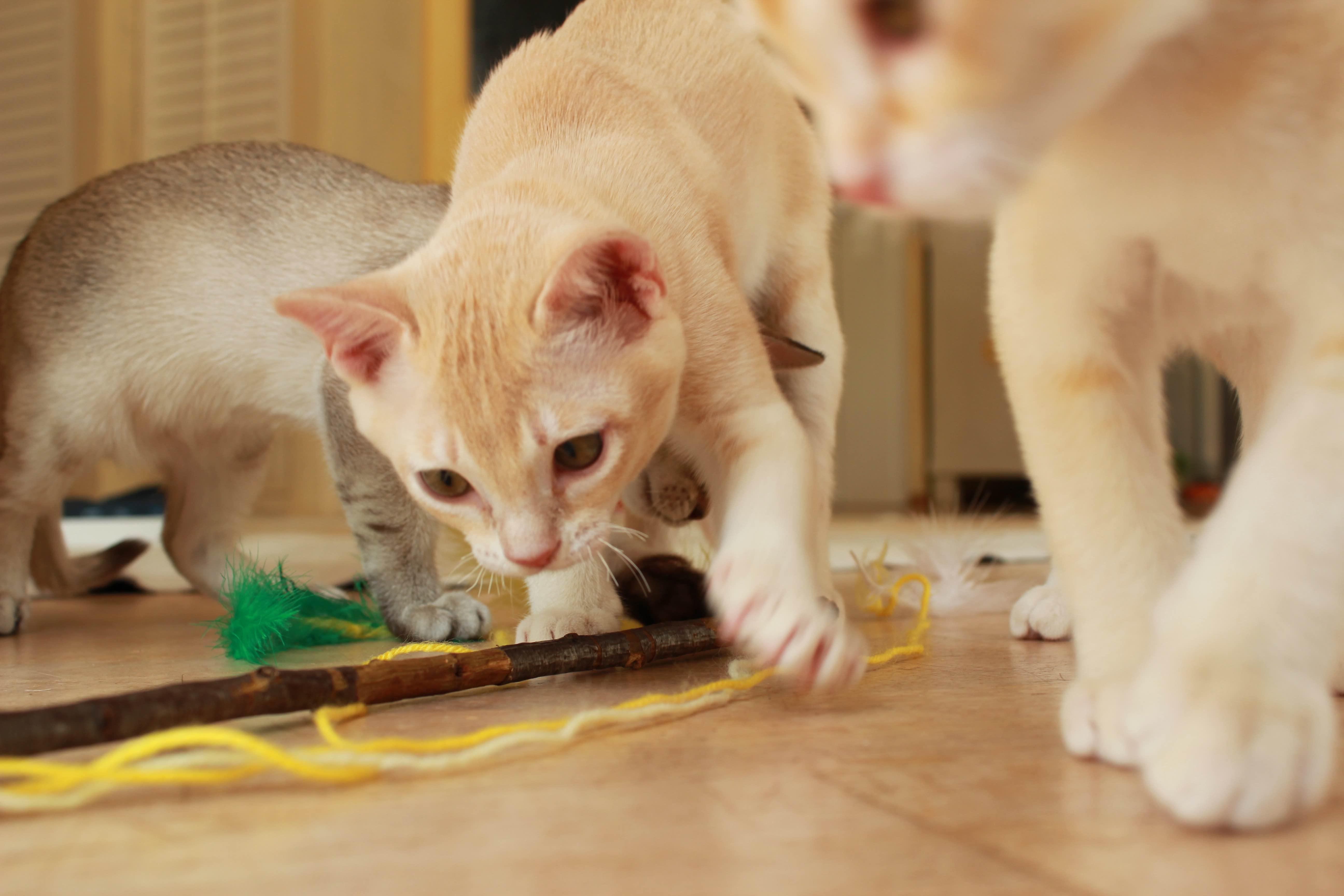 Katzen 108_Fotor