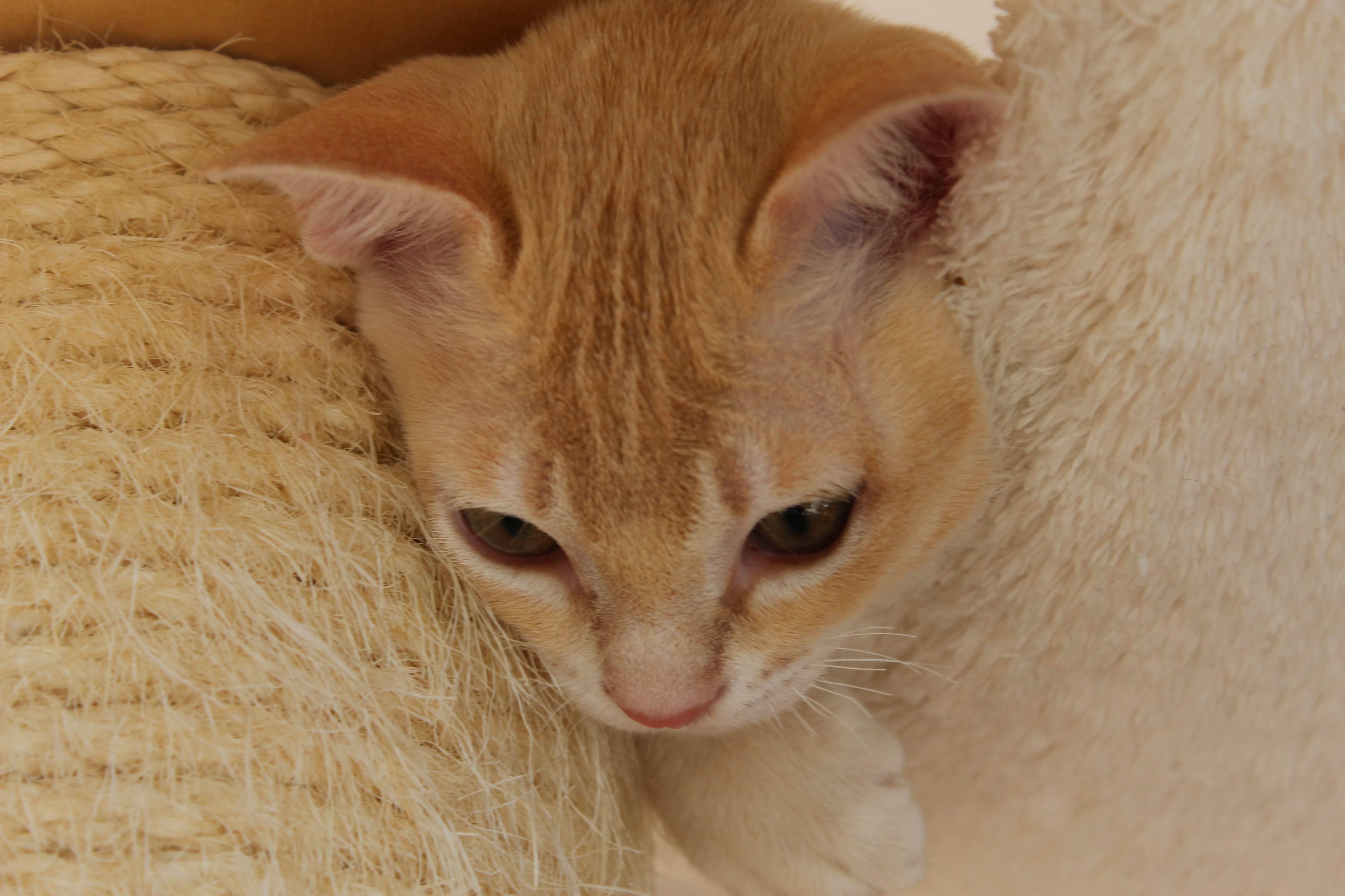 Katzen 136_Fotor