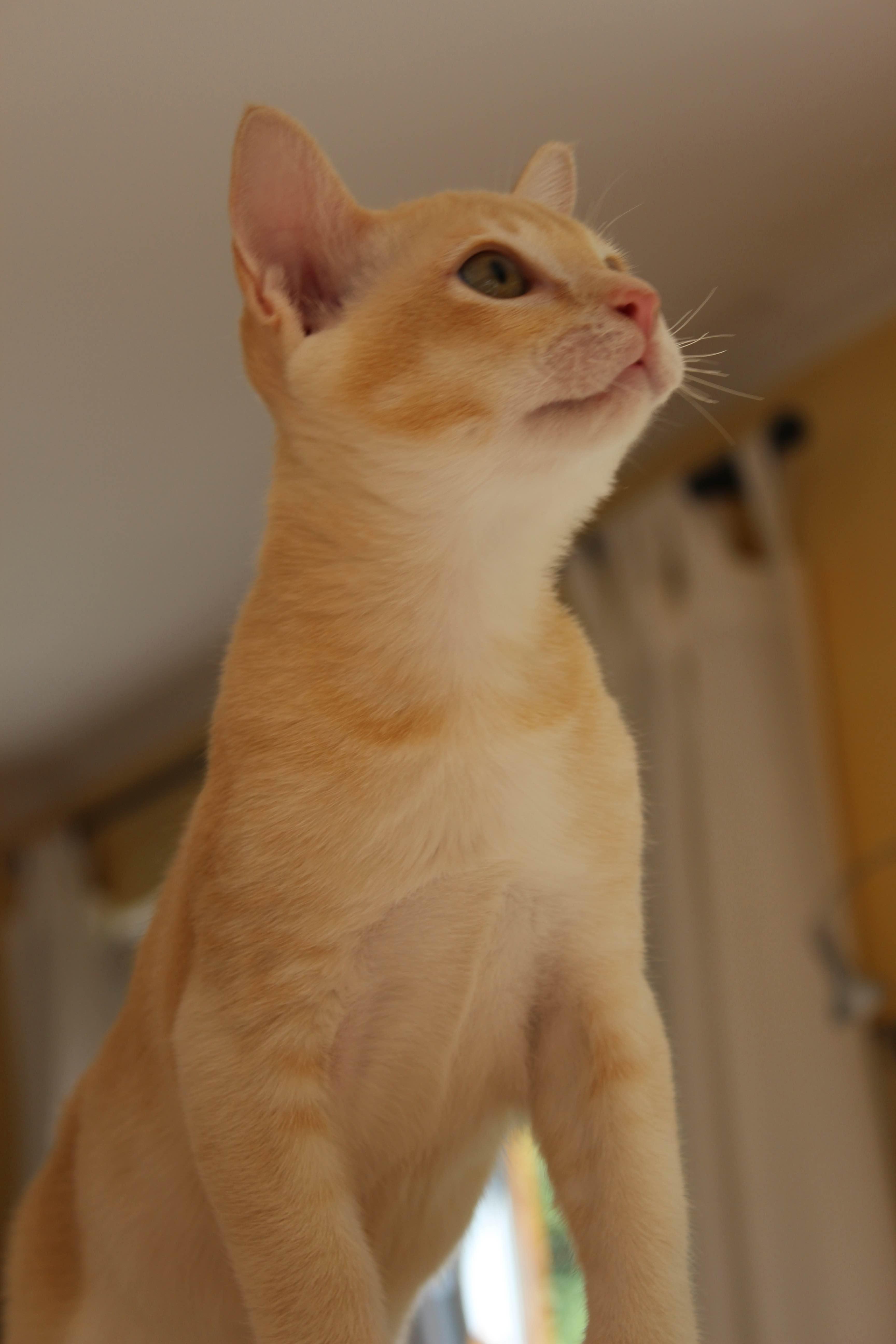 Katzen 156_Fotor