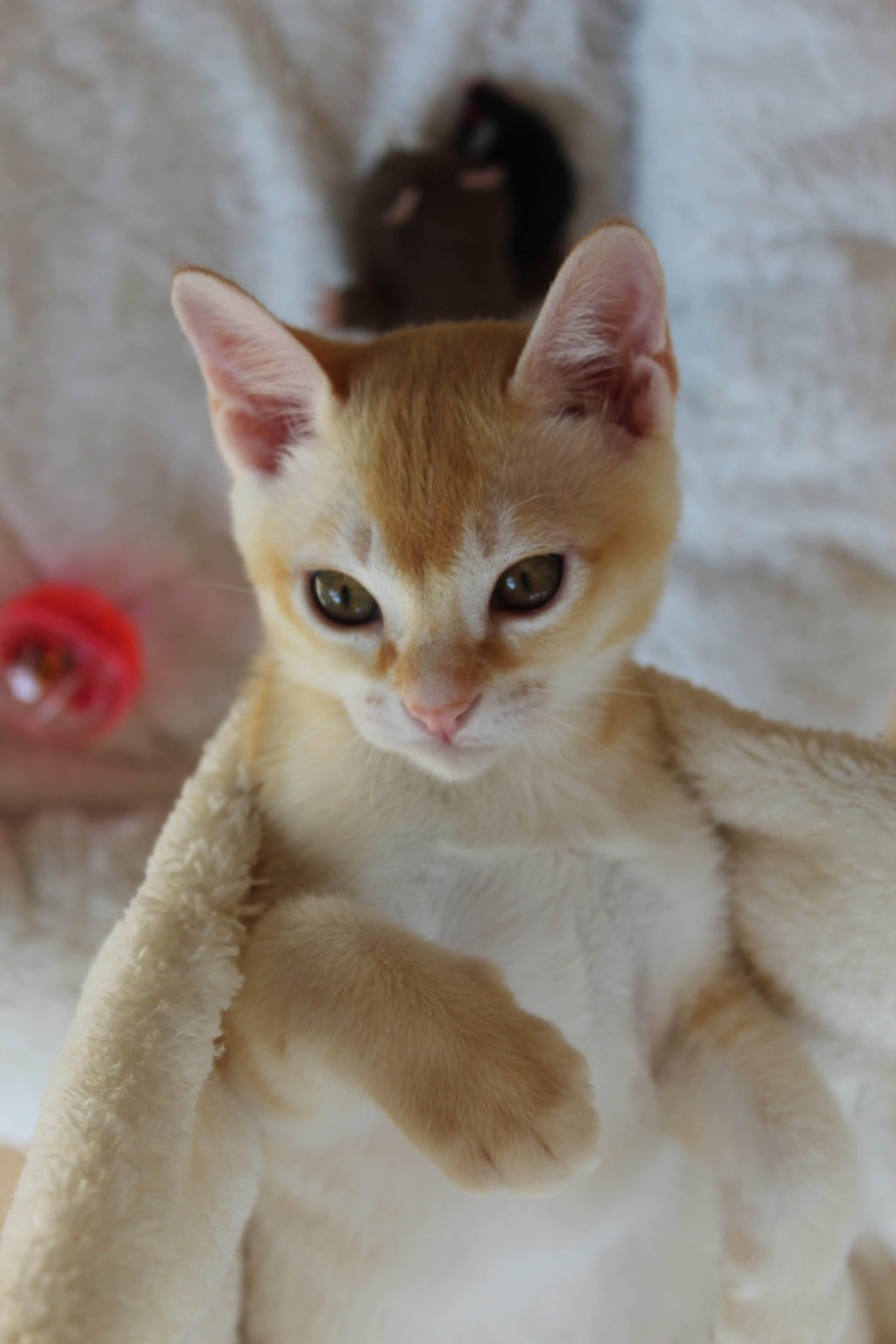 Katzen 162_Fotor
