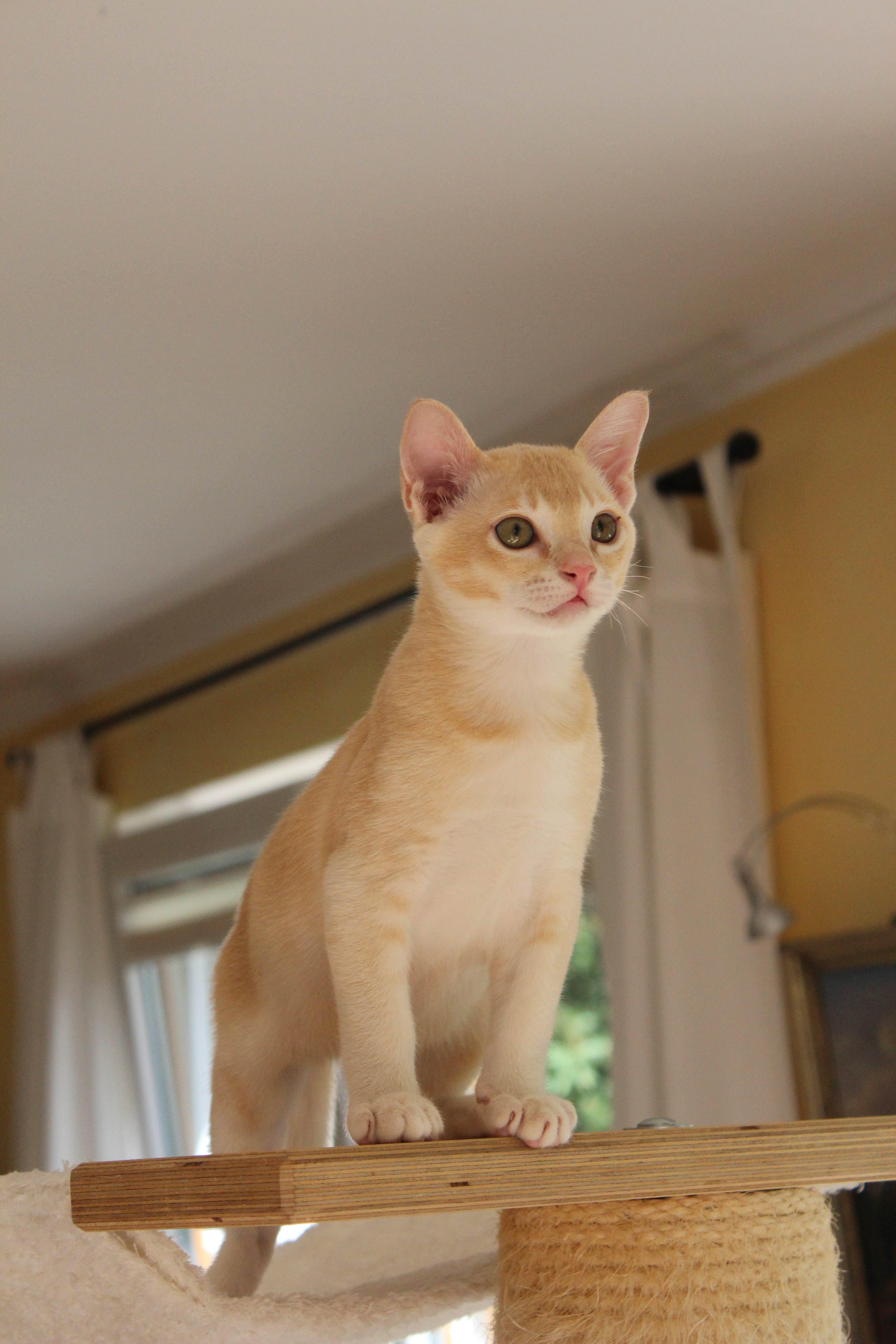 Katzen 168_Fotor