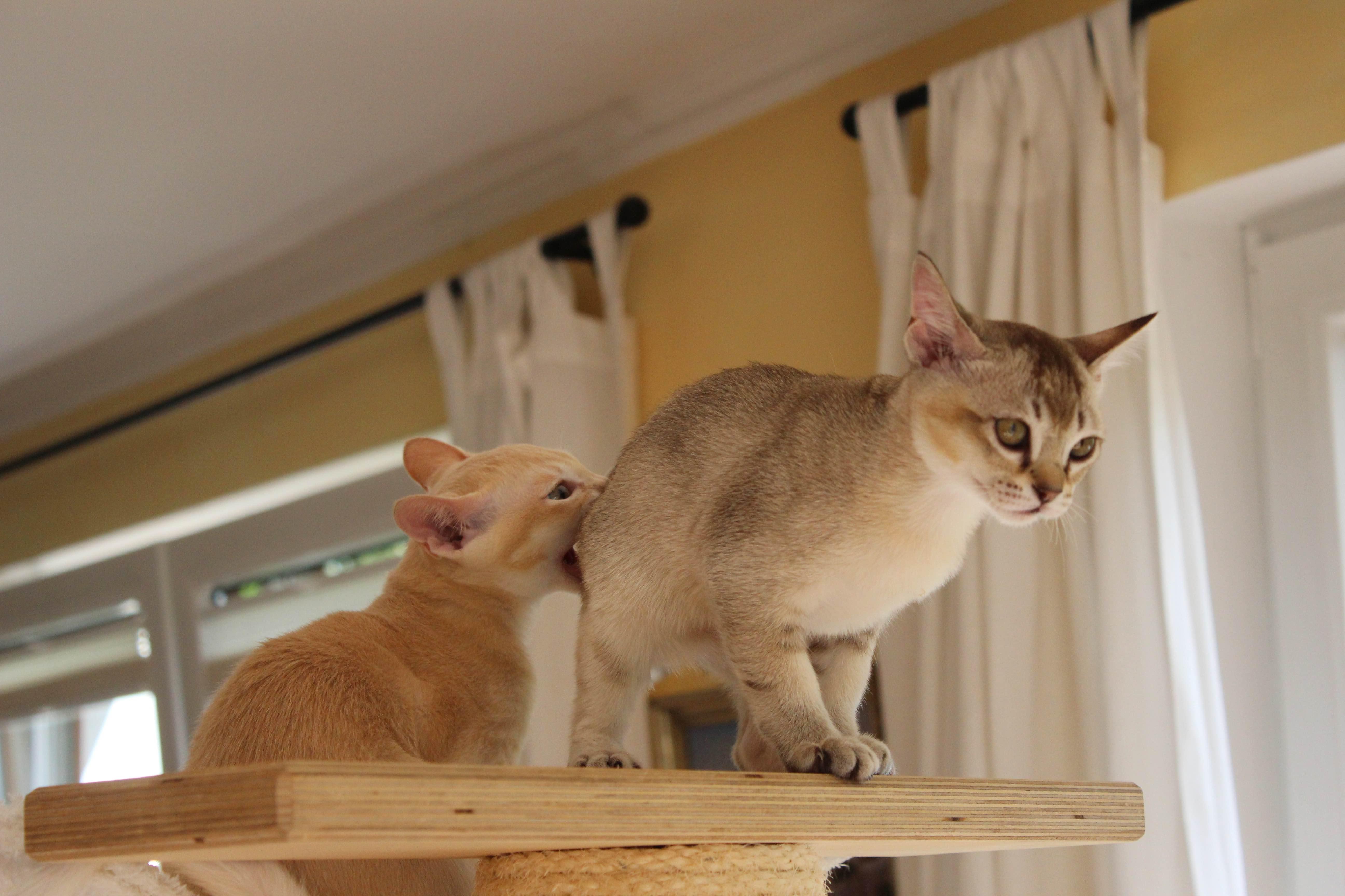 Katzen 169_Fotor