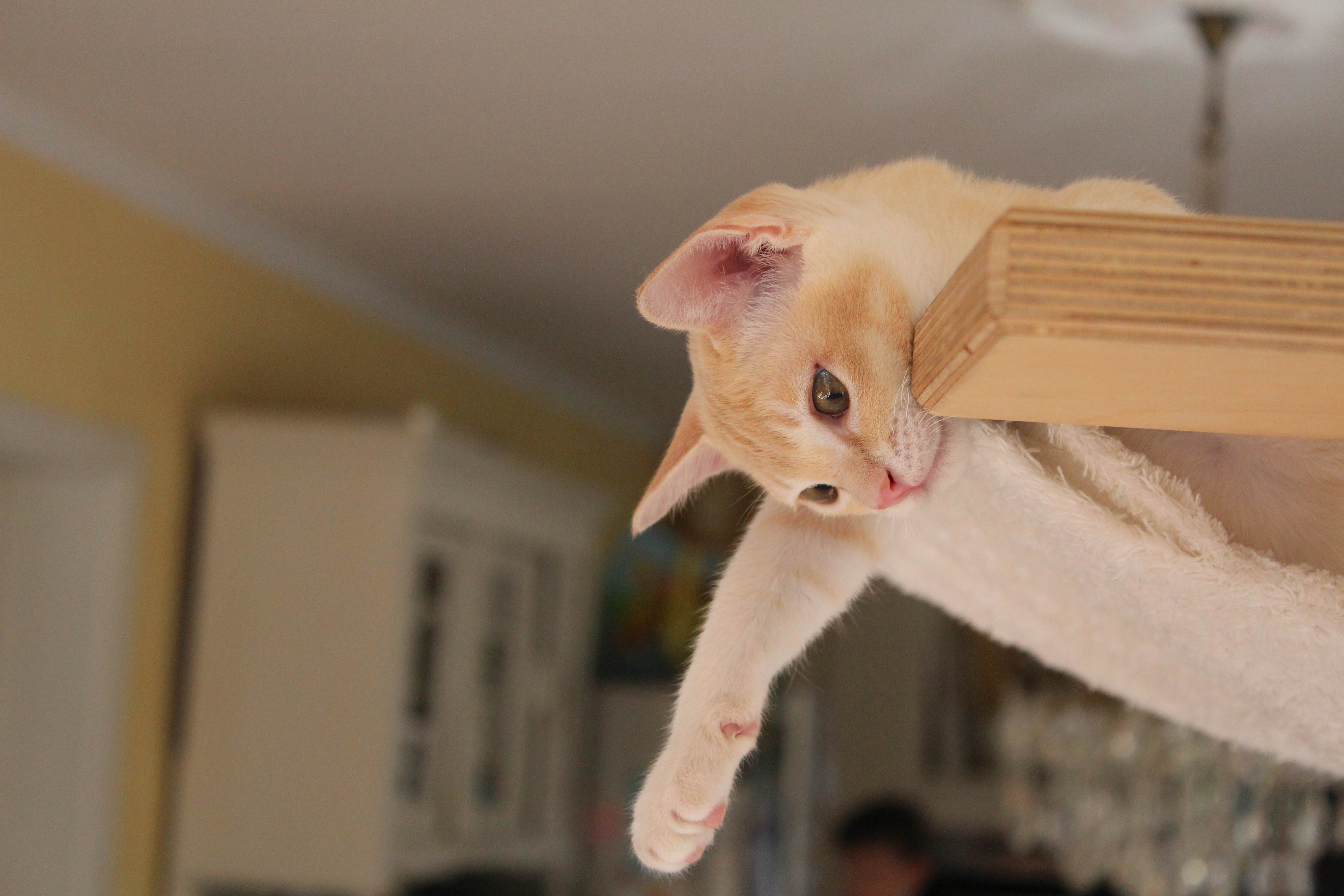 Katzen 175_Fotor