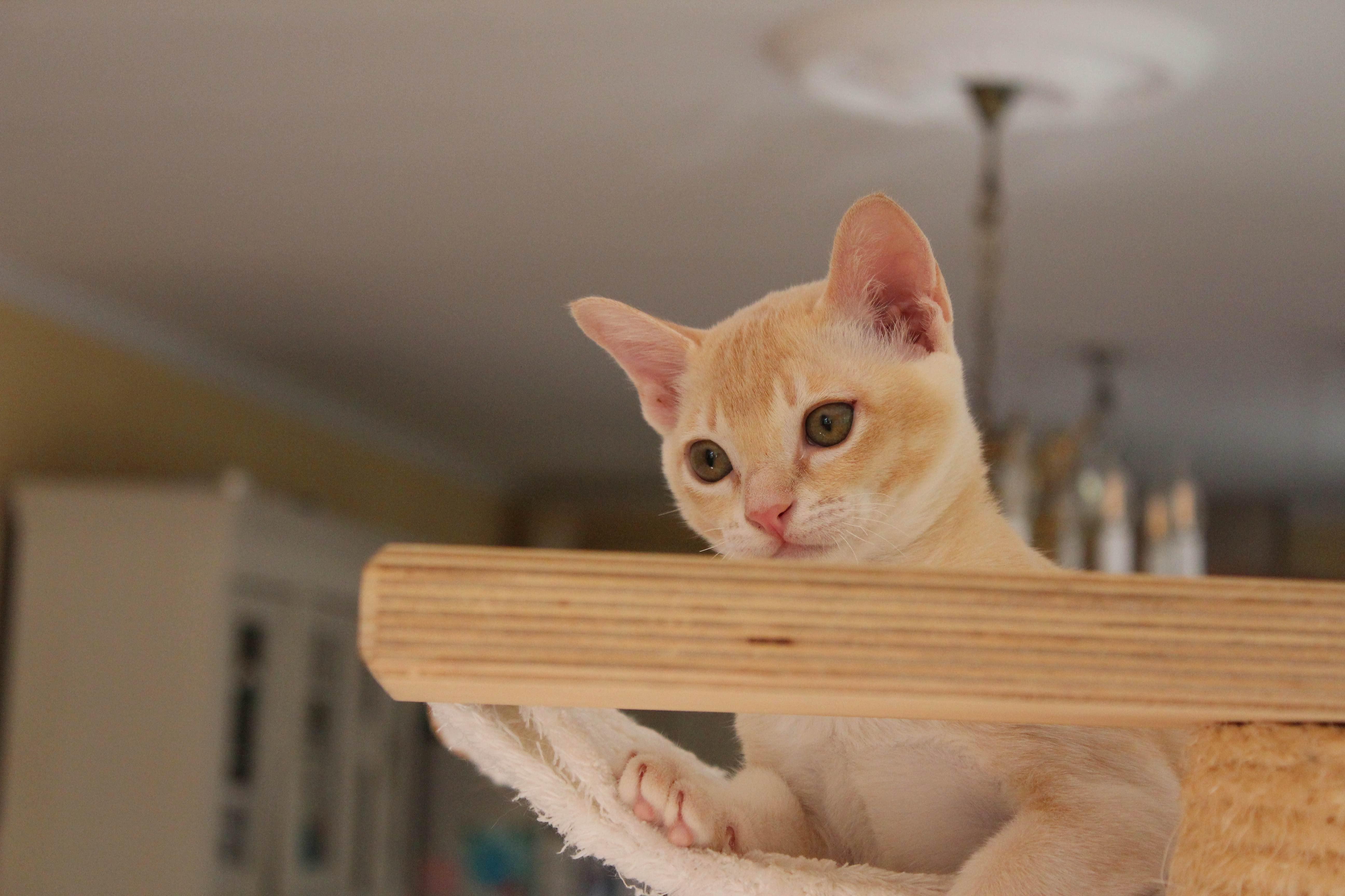 Katzen 176_Fotor