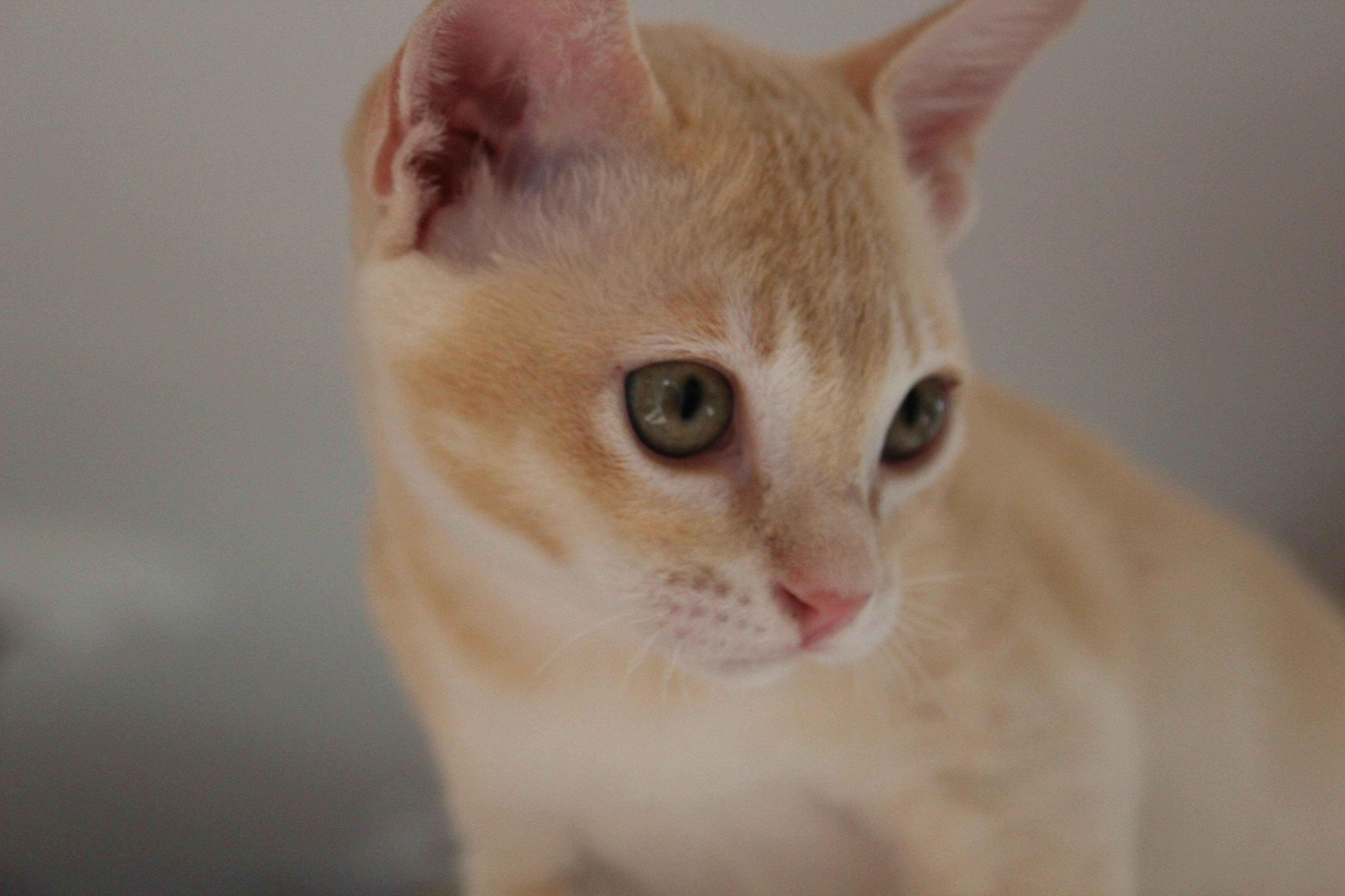 Katzen 183_Fotor