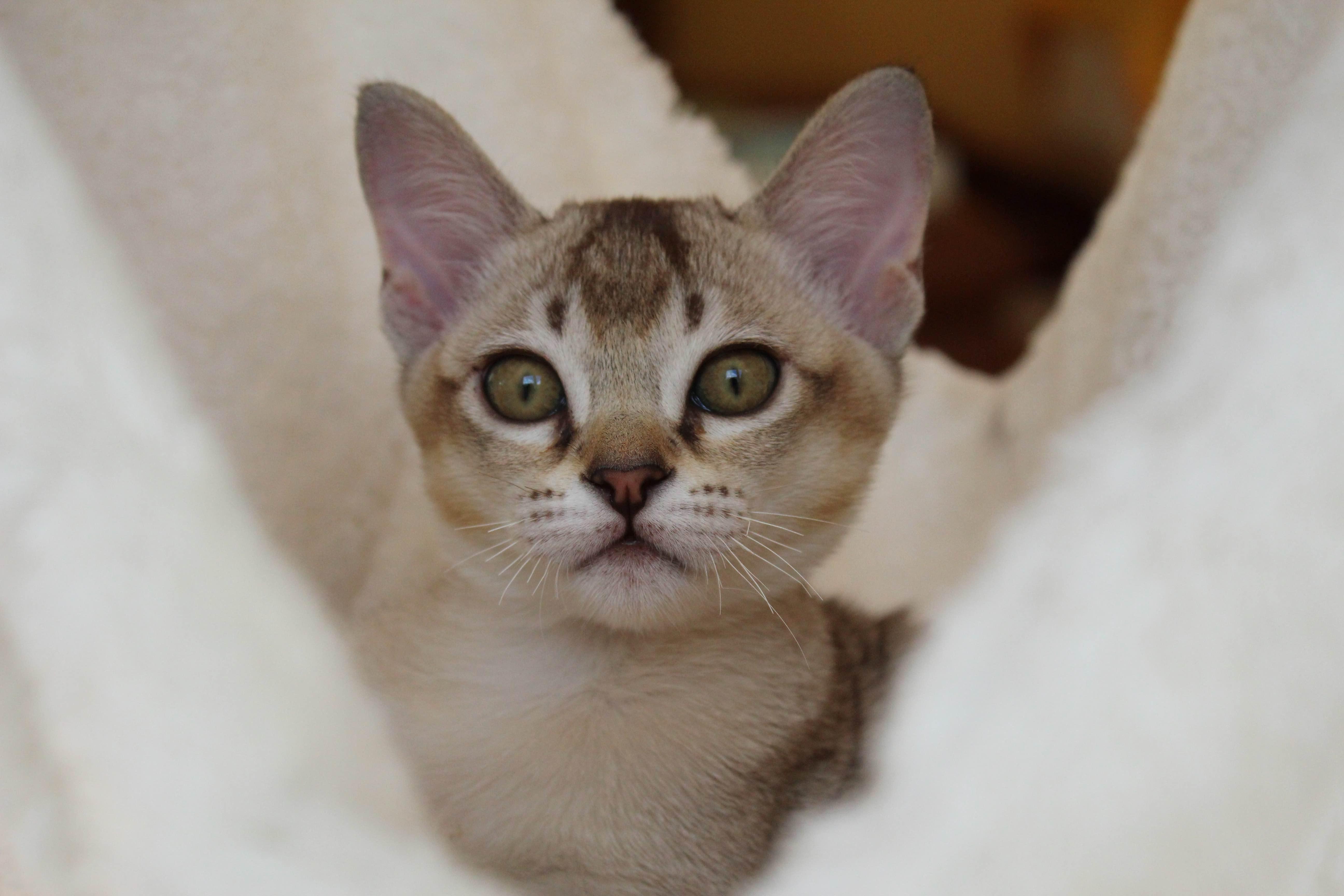 Katzen 193_Fotor