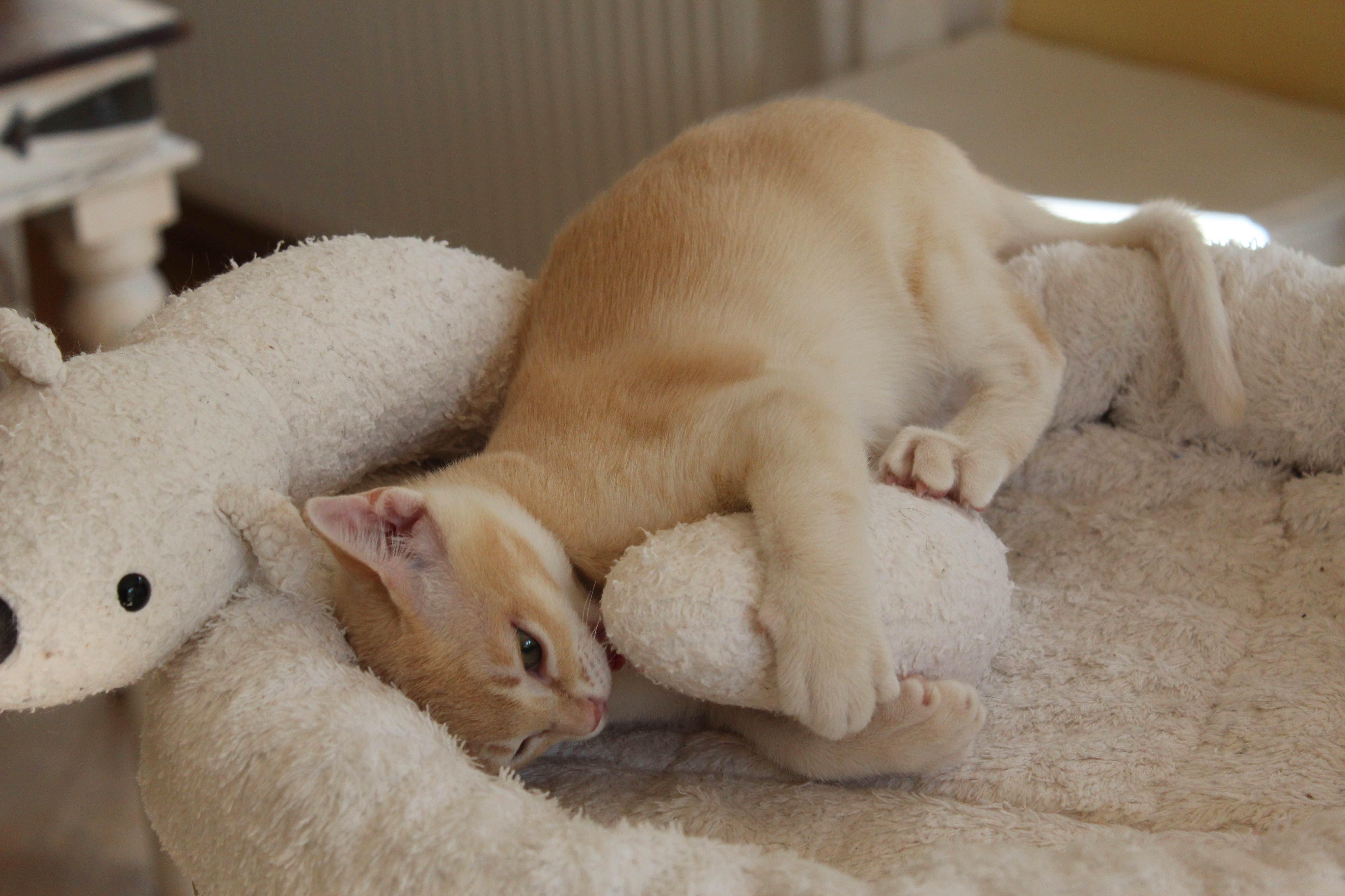 Katzen 200_Fotor