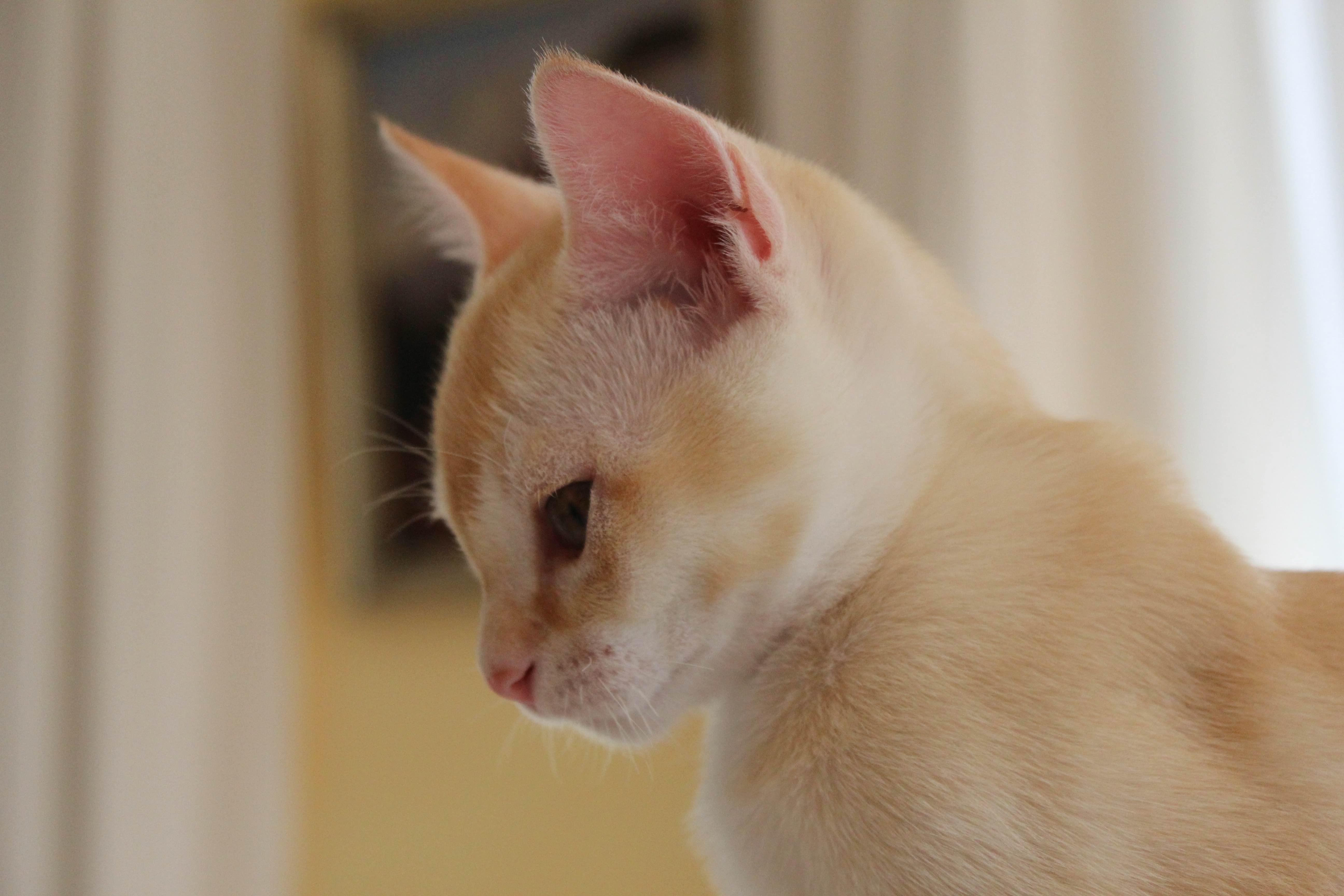 Katzen 204_Fotor