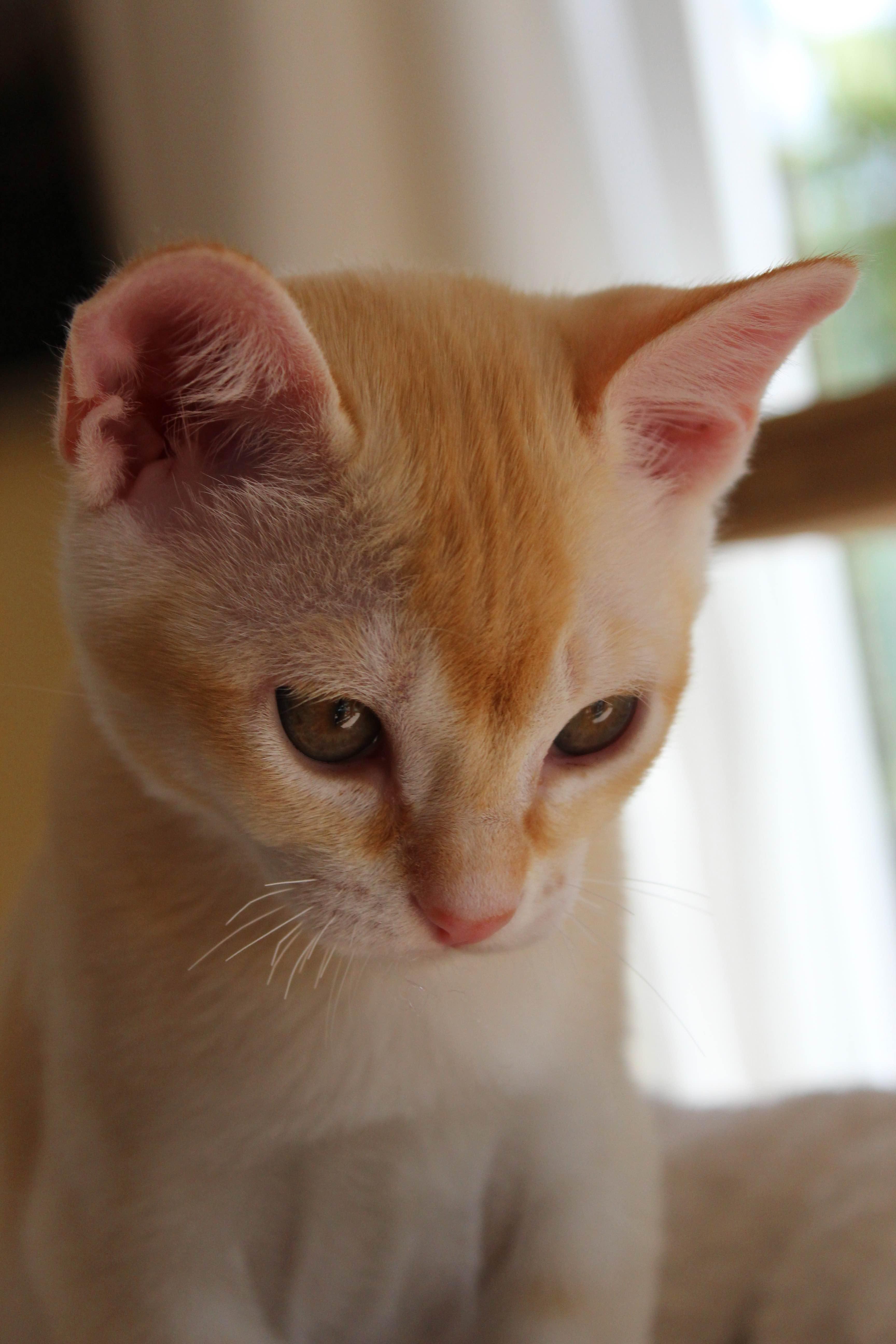 Katzen 206_Fotor