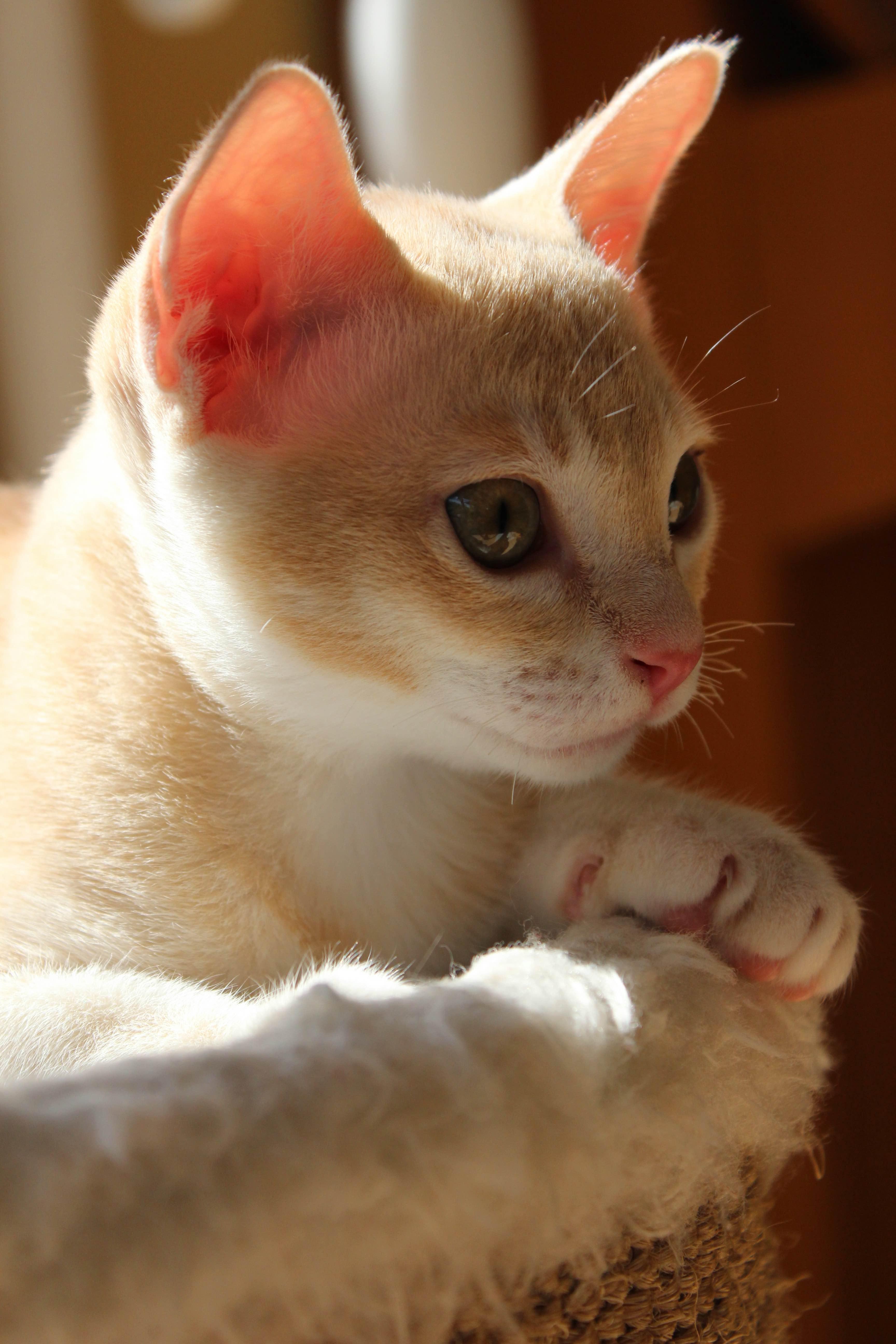 Katzen 216_Fotor
