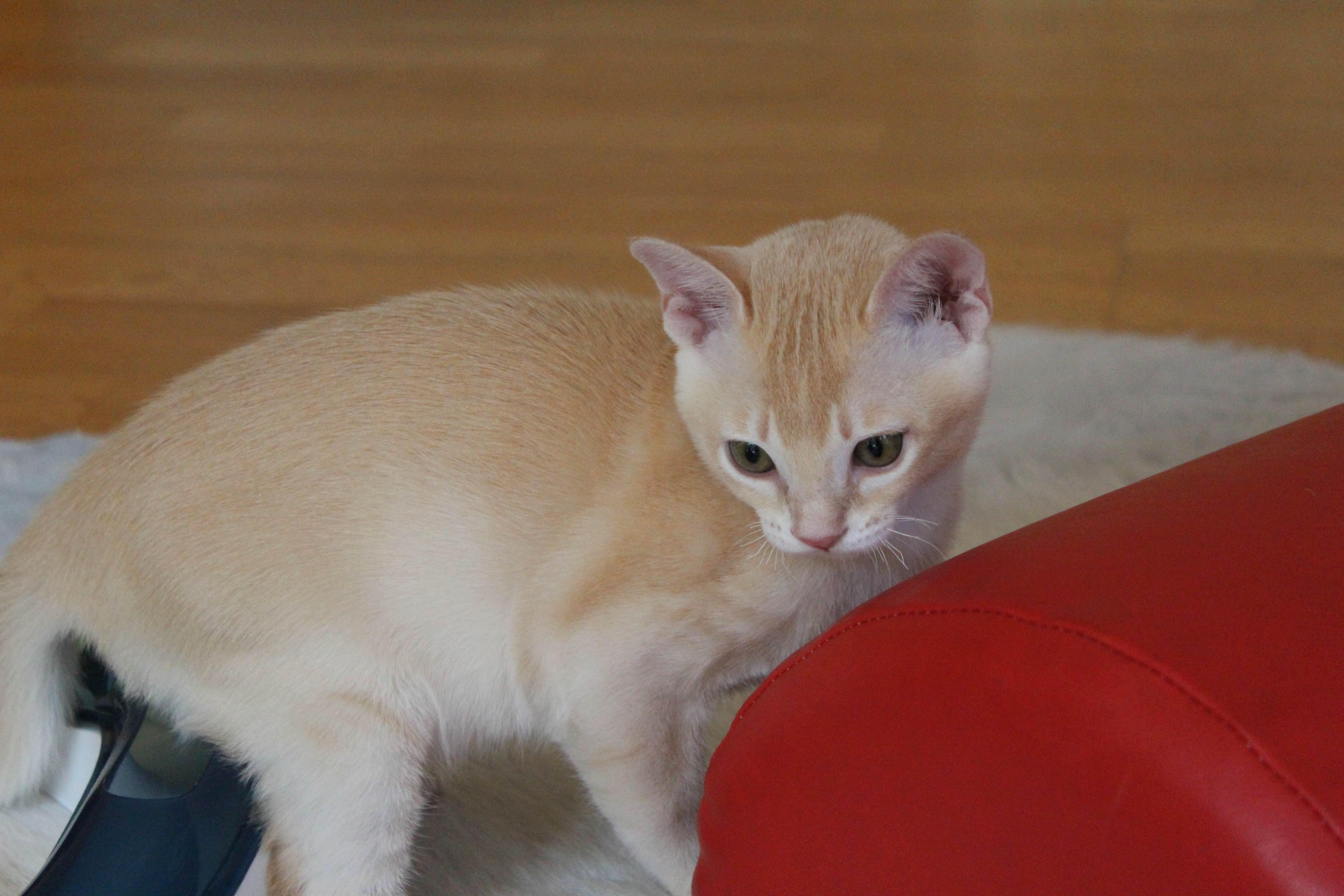 Katzen 231_Fotor
