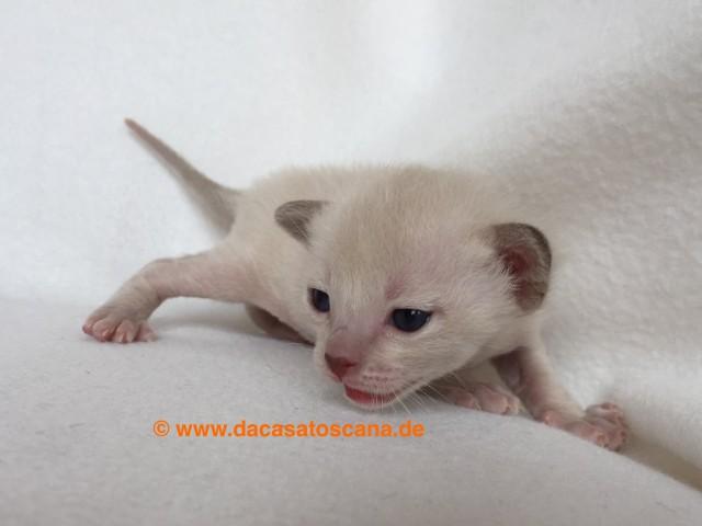 Kitten 2 Tag 17