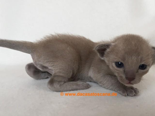 Kitten 3 Tag 17