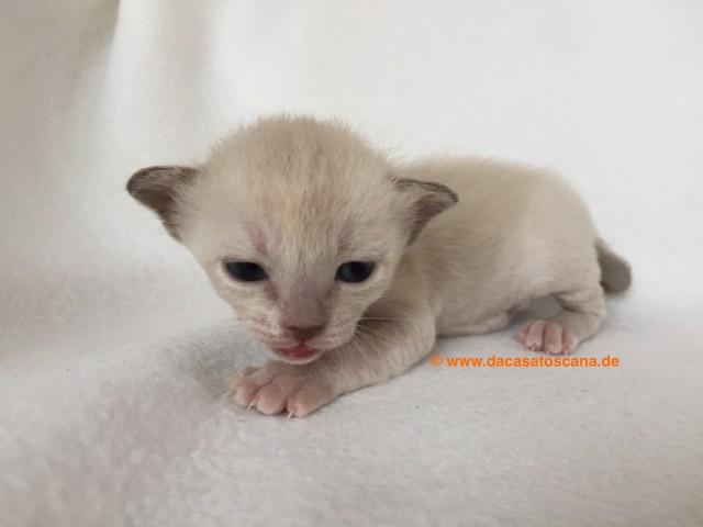 Kitten 4 Tag 17
