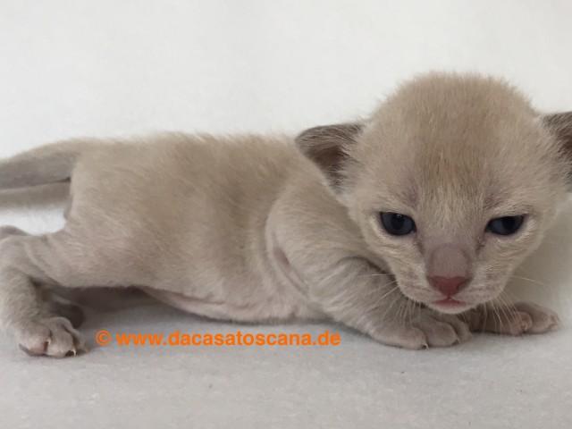 Kitten 5 Tag 17