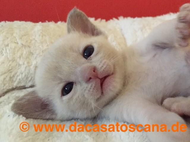 Kitten 1 Tag 26