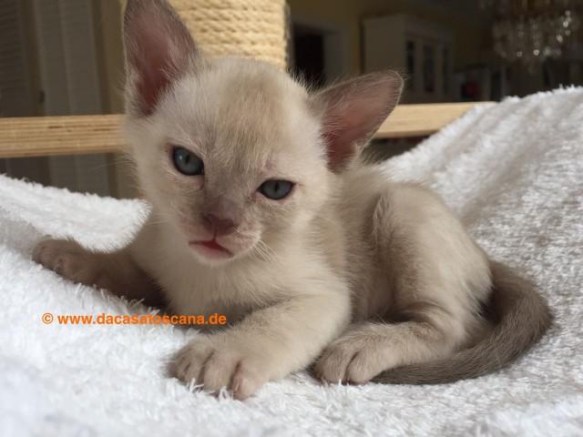 Kitten 2 Tag 36