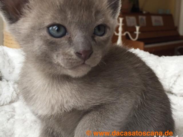 Kitten 3 Tag 36