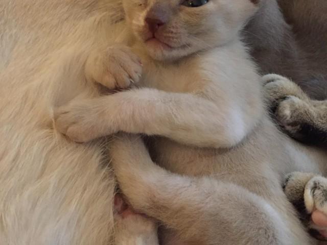 Kitten 4 Tag 26