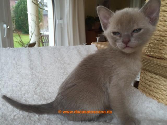 Kitten 5 Tag 36