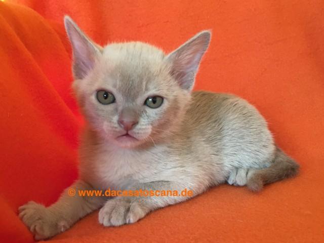Kitten1_Tag47
