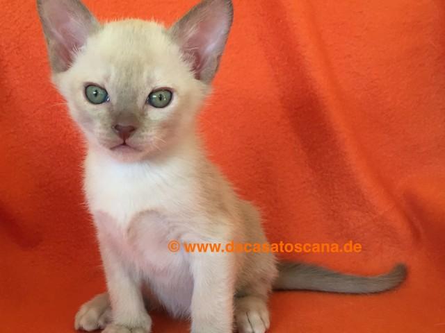 Kitten2_Tag47