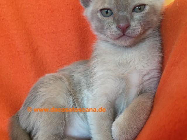 Kitten5_Tag47