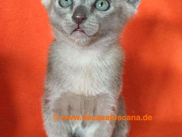 Kitten3_Tag47